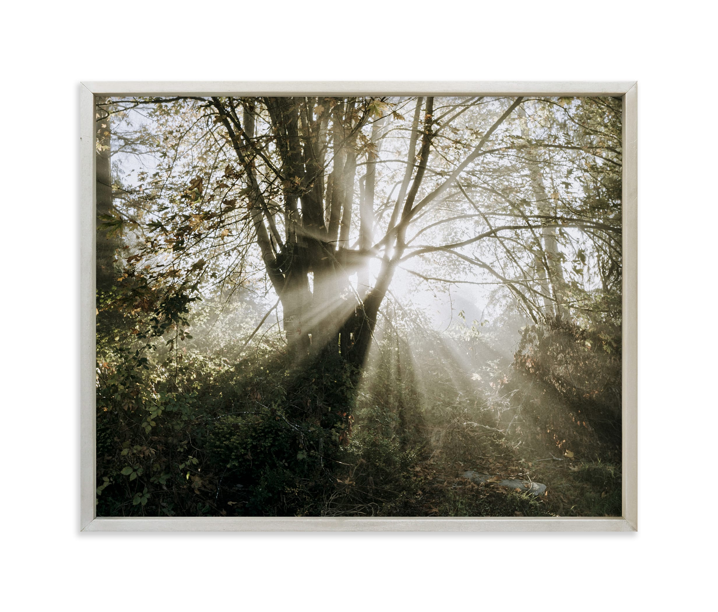 """""""Foggy Treehouse"""" - Limited Edition Art Print by Katie Buckman in beautiful frame options and a variety of sizes."""