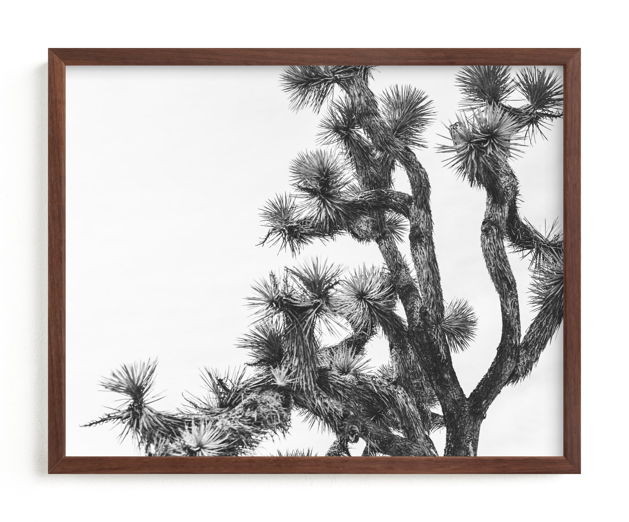 """""""Joshua Tree in September"""" - Limited Edition Art Print by Katie Doherty in beautiful frame options and a variety of sizes."""