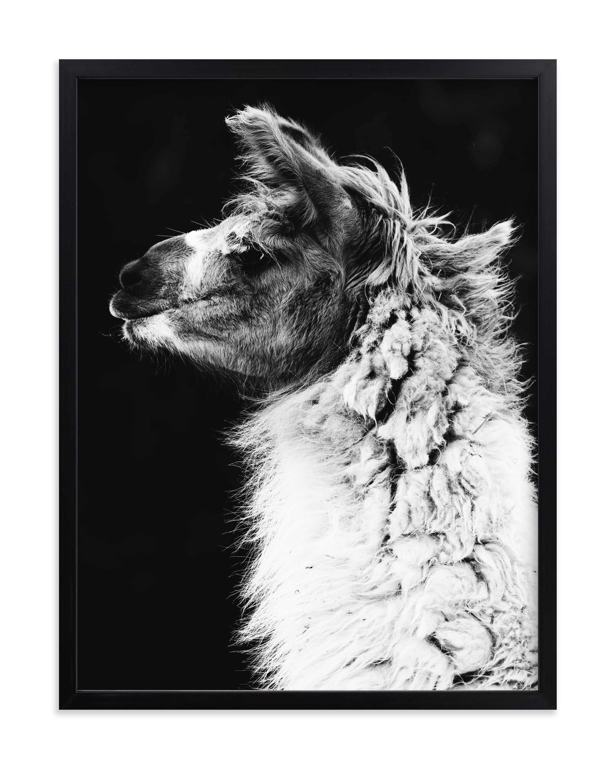 """Kai"" - Limited Edition Art Print by Amy Carroll in beautiful frame options and a variety of sizes."