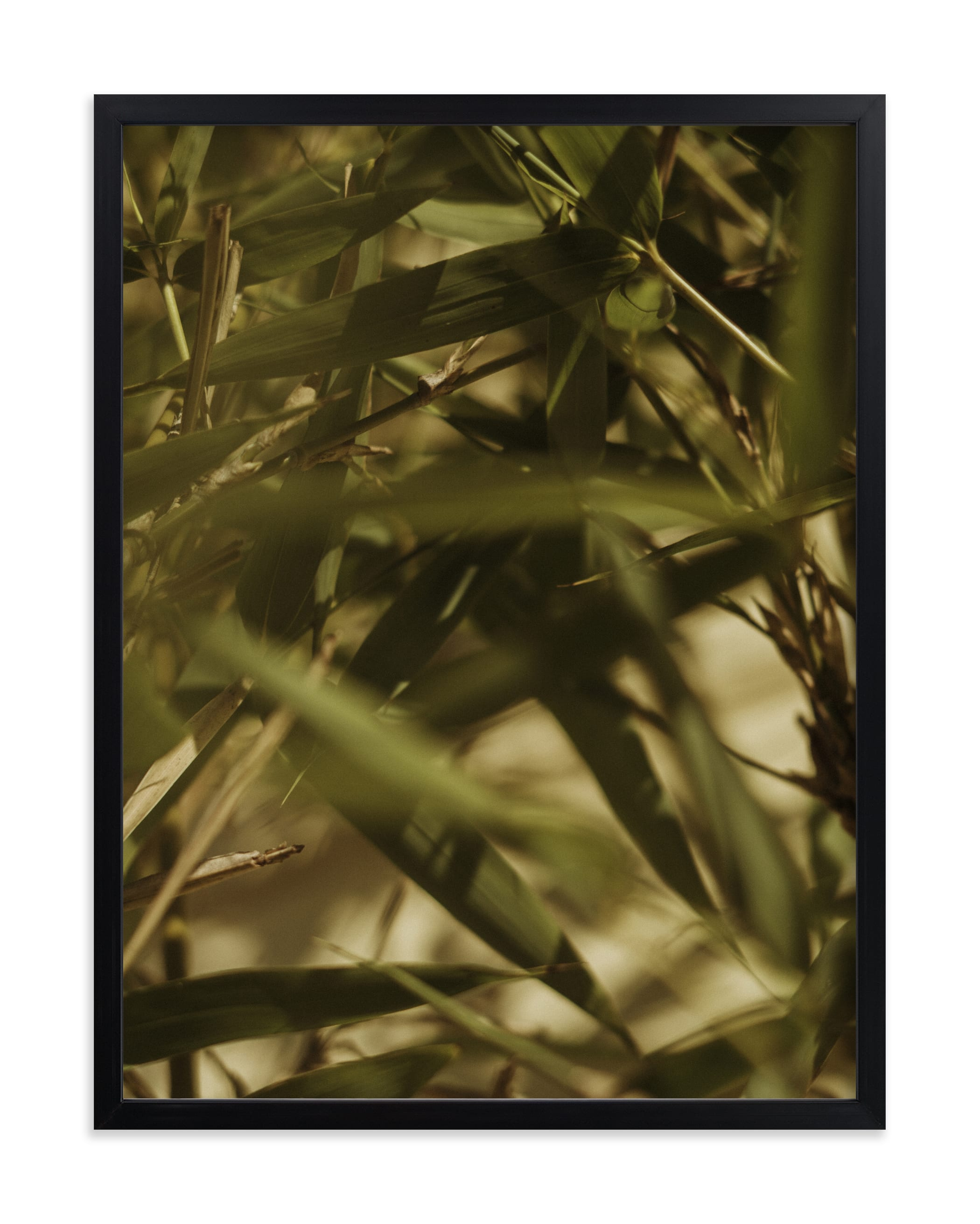 """""""Bamboo Breeze"""" - Limited Edition Art Print by Katie Buckman in beautiful frame options and a variety of sizes."""