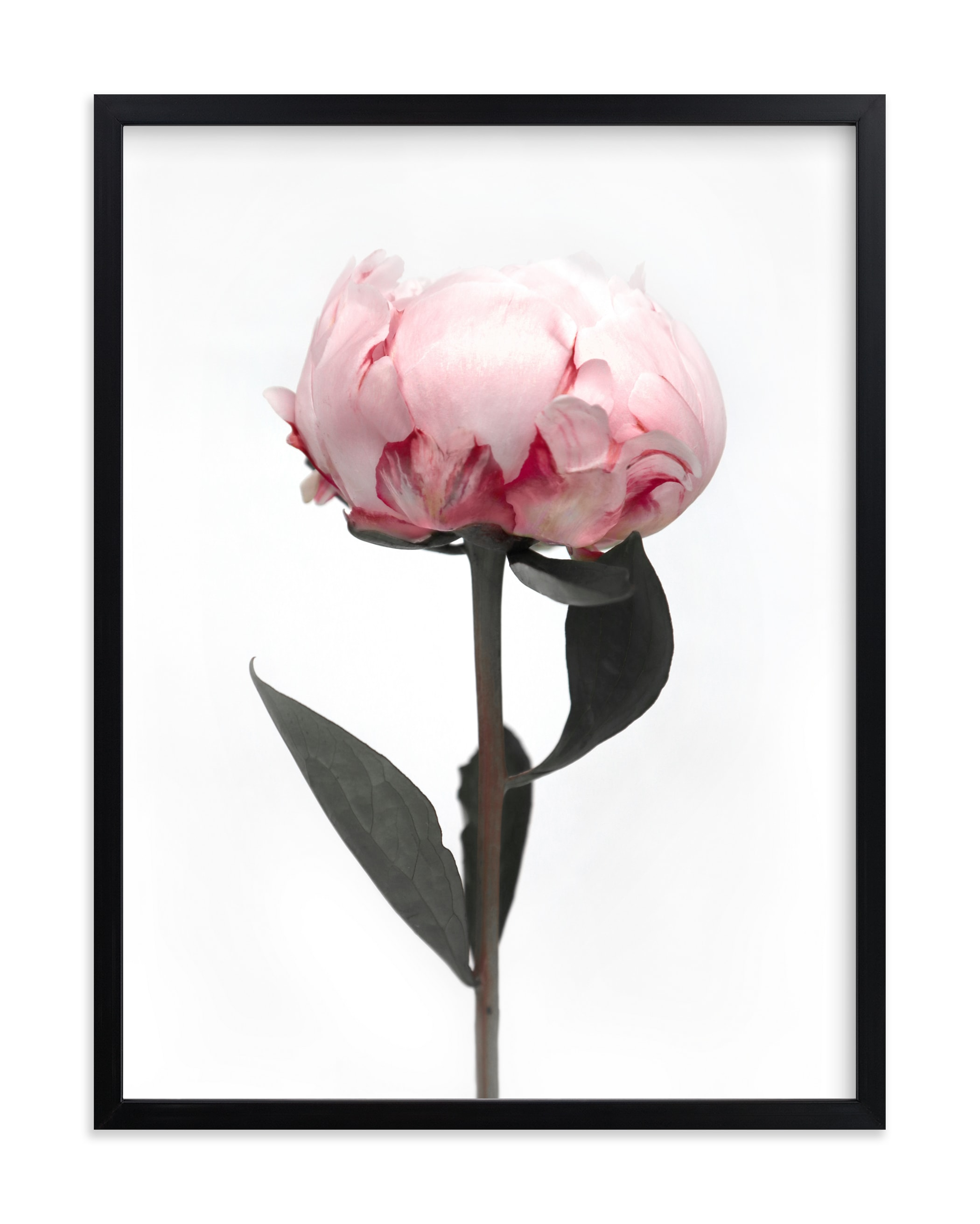 """""""Peonia"""" by Rosana Laiz Blursbyai in beautiful frame options and a variety of sizes."""