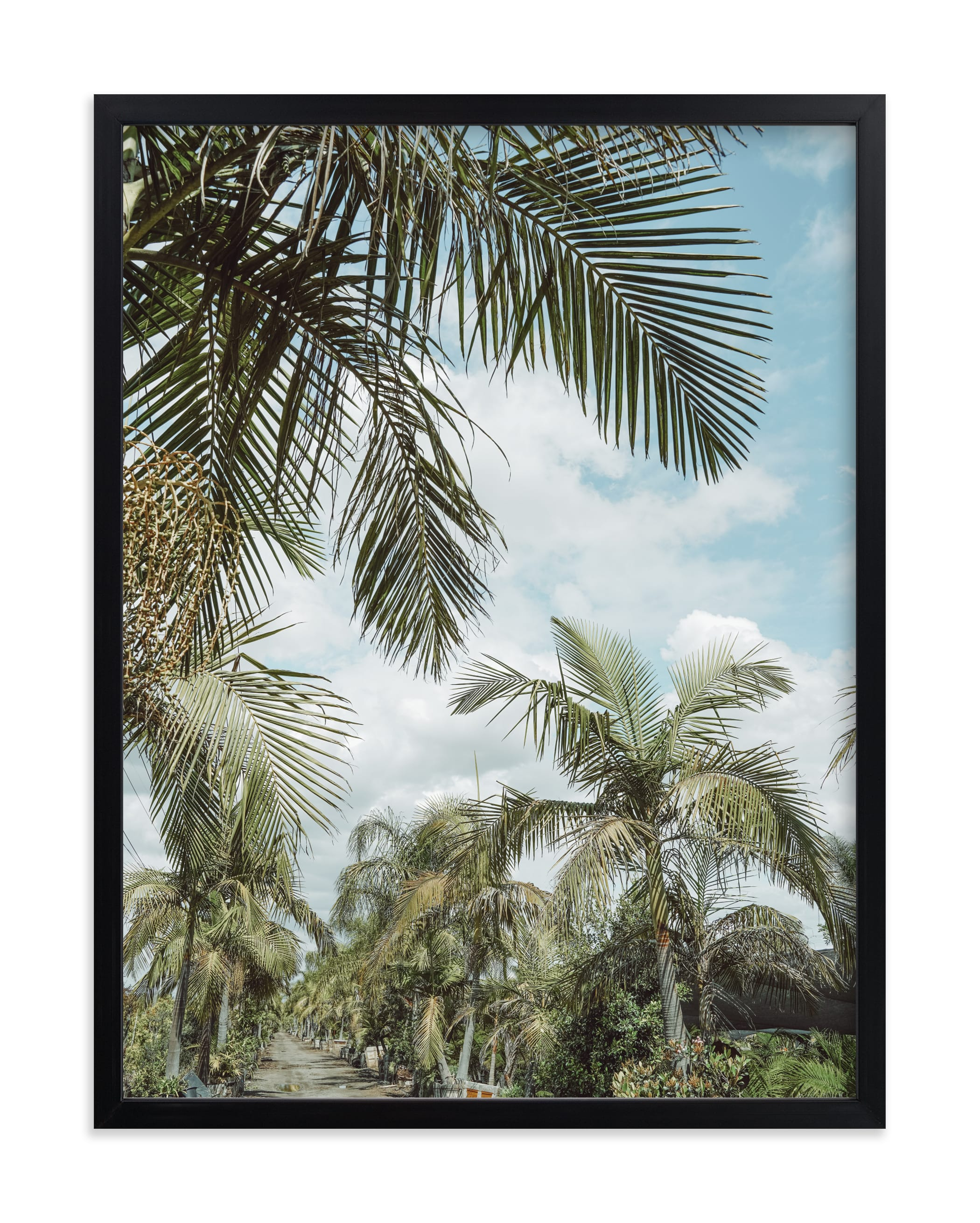 """""""Isla Pacifica"""" by Owl and Toad in beautiful frame options and a variety of sizes."""