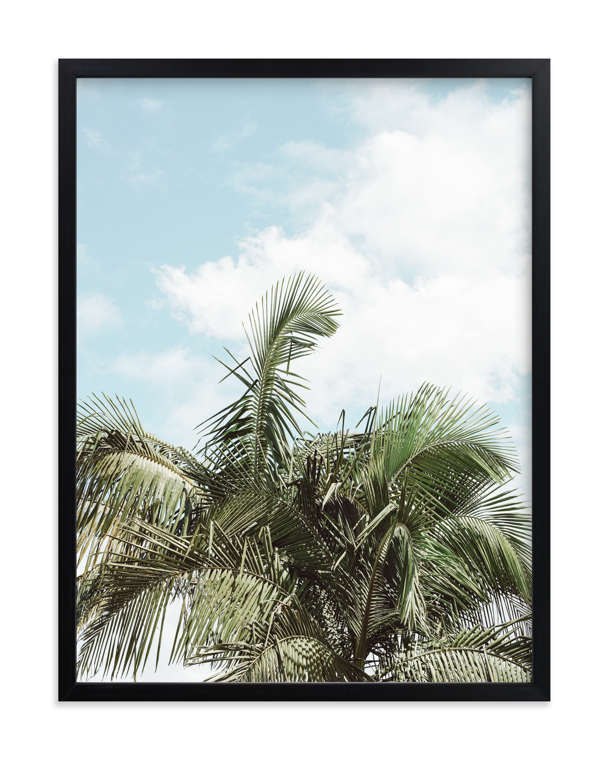 """""""Palm Top No. 1"""" by Owl and Toad in beautiful frame options and a variety of sizes."""
