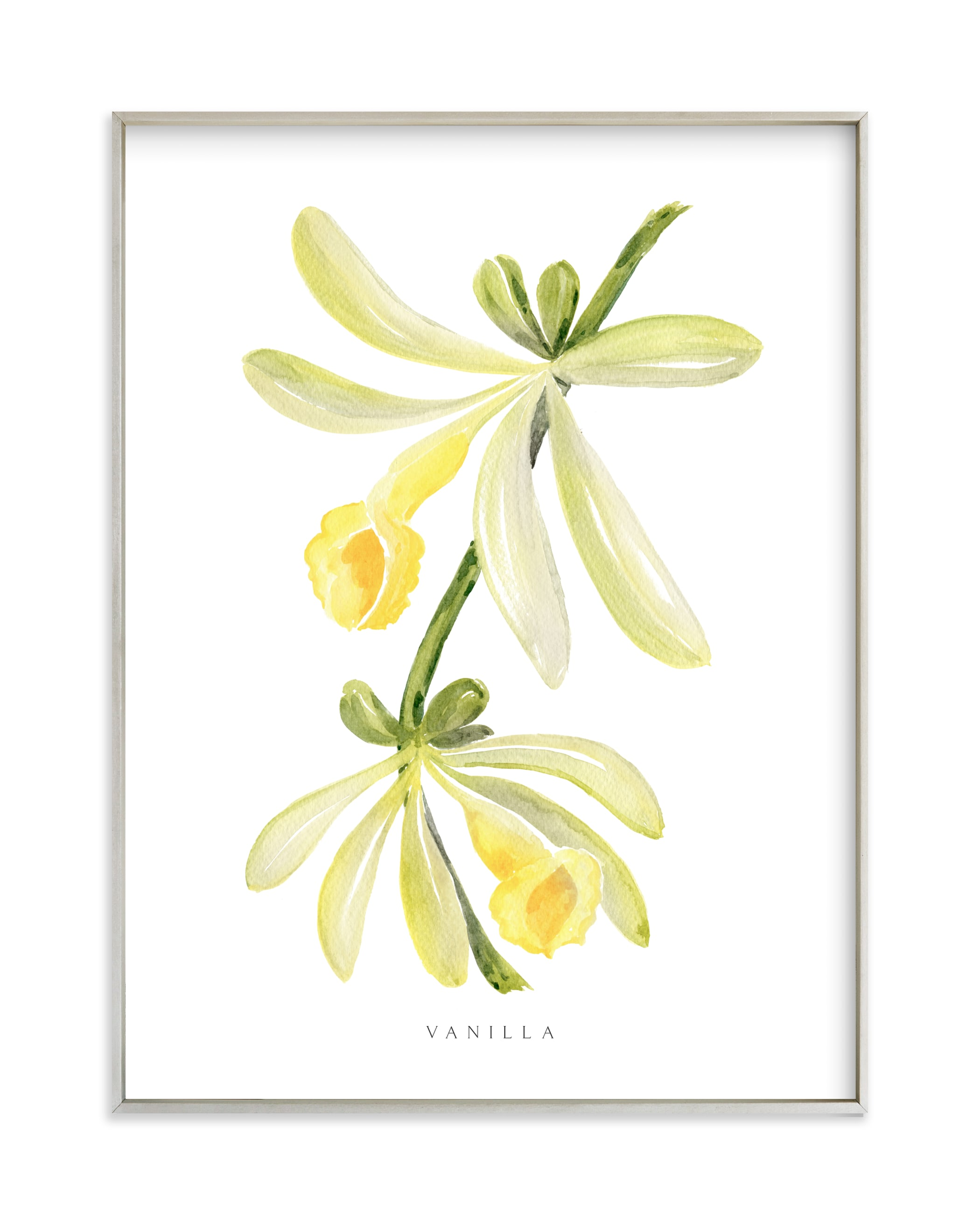 """Vanilla orchid"" by Rosana Laiz Blursbyai in beautiful frame options and a variety of sizes."