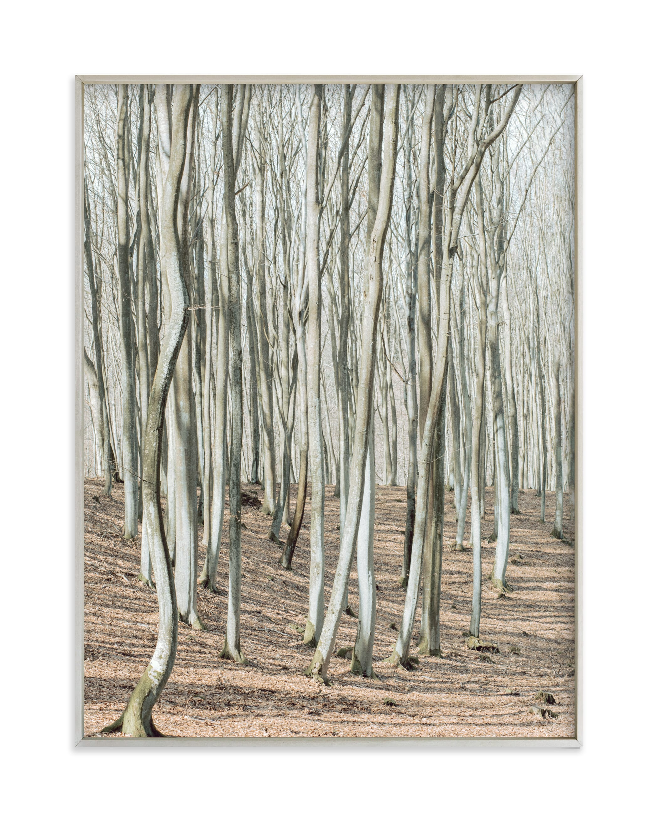 """""""Smooth forest"""" by Lying on the grass in beautiful frame options and a variety of sizes."""