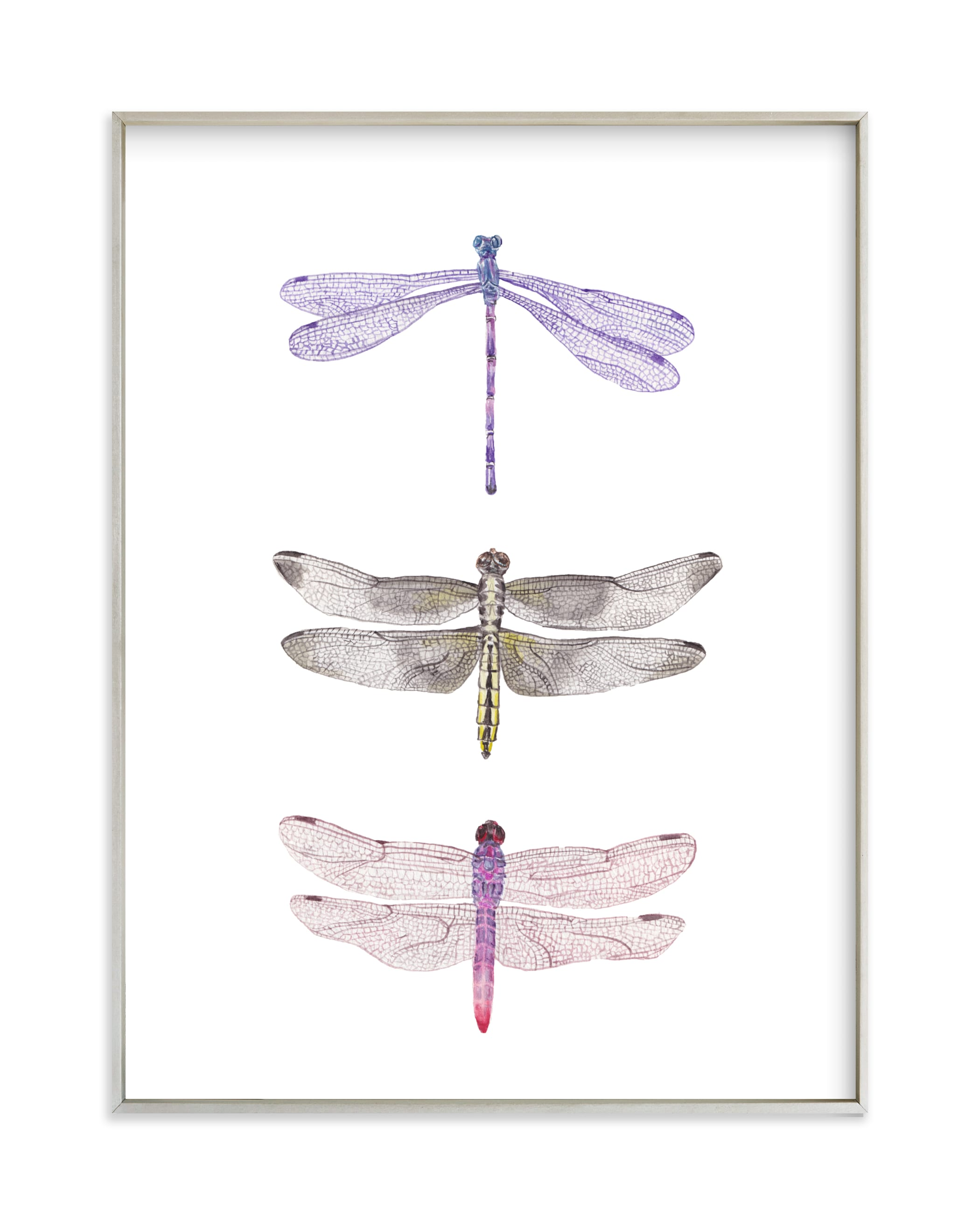 """Watercolor Dragonflies"" by Lauren Rogoff in beautiful frame options and a variety of sizes."