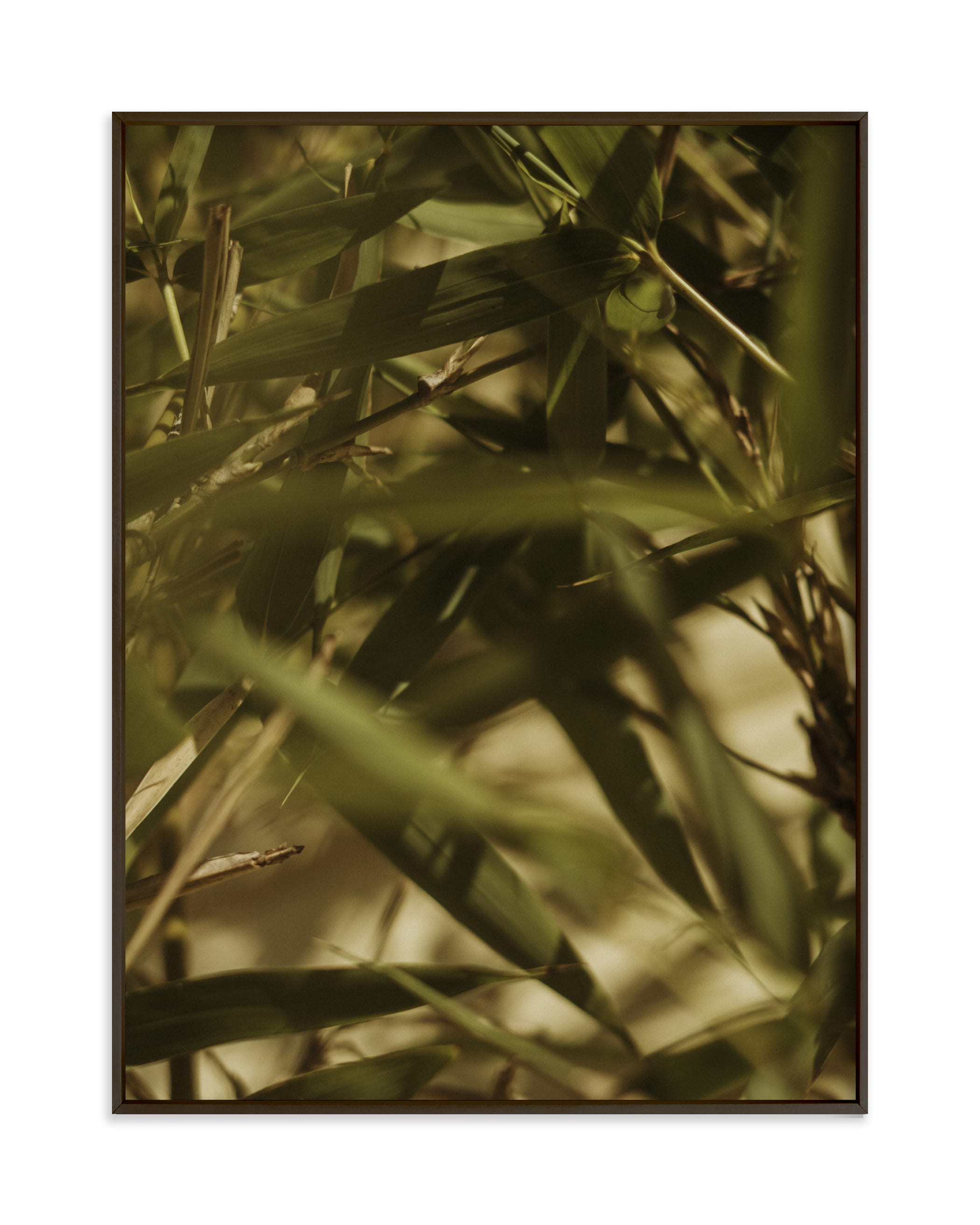 Bamboo Breeze Wall Art Print