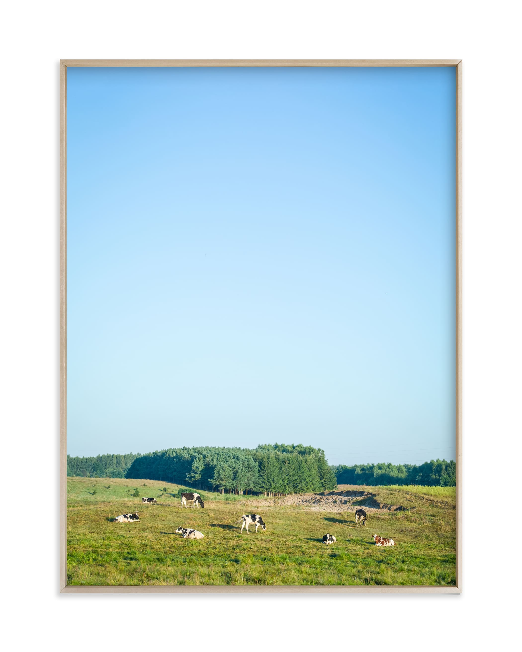 """""""Pasture of cows"""" by Lying on the grass in beautiful frame options and a variety of sizes."""