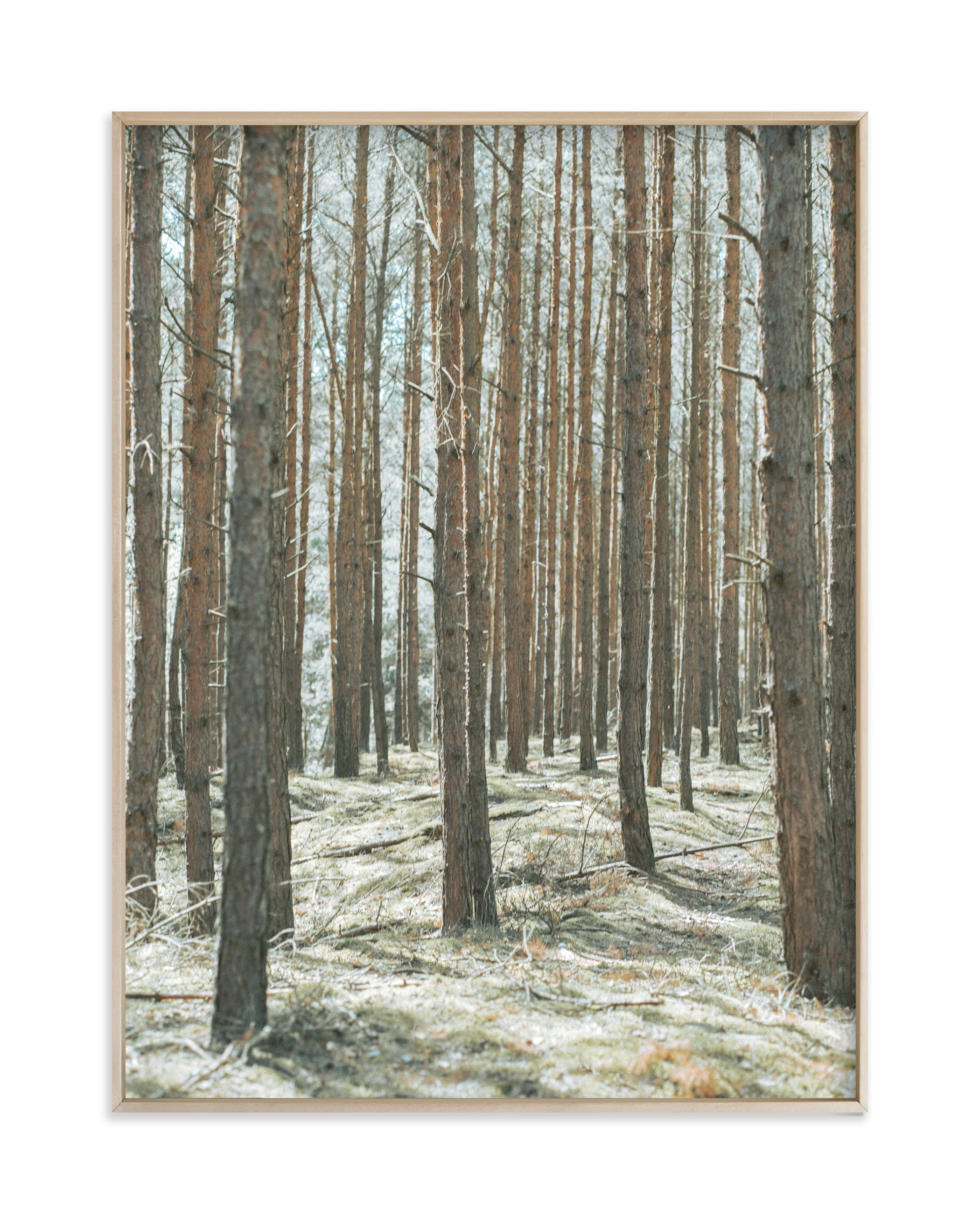 """Sharp forest"" by Lying on the grass in beautiful frame options and a variety of sizes."