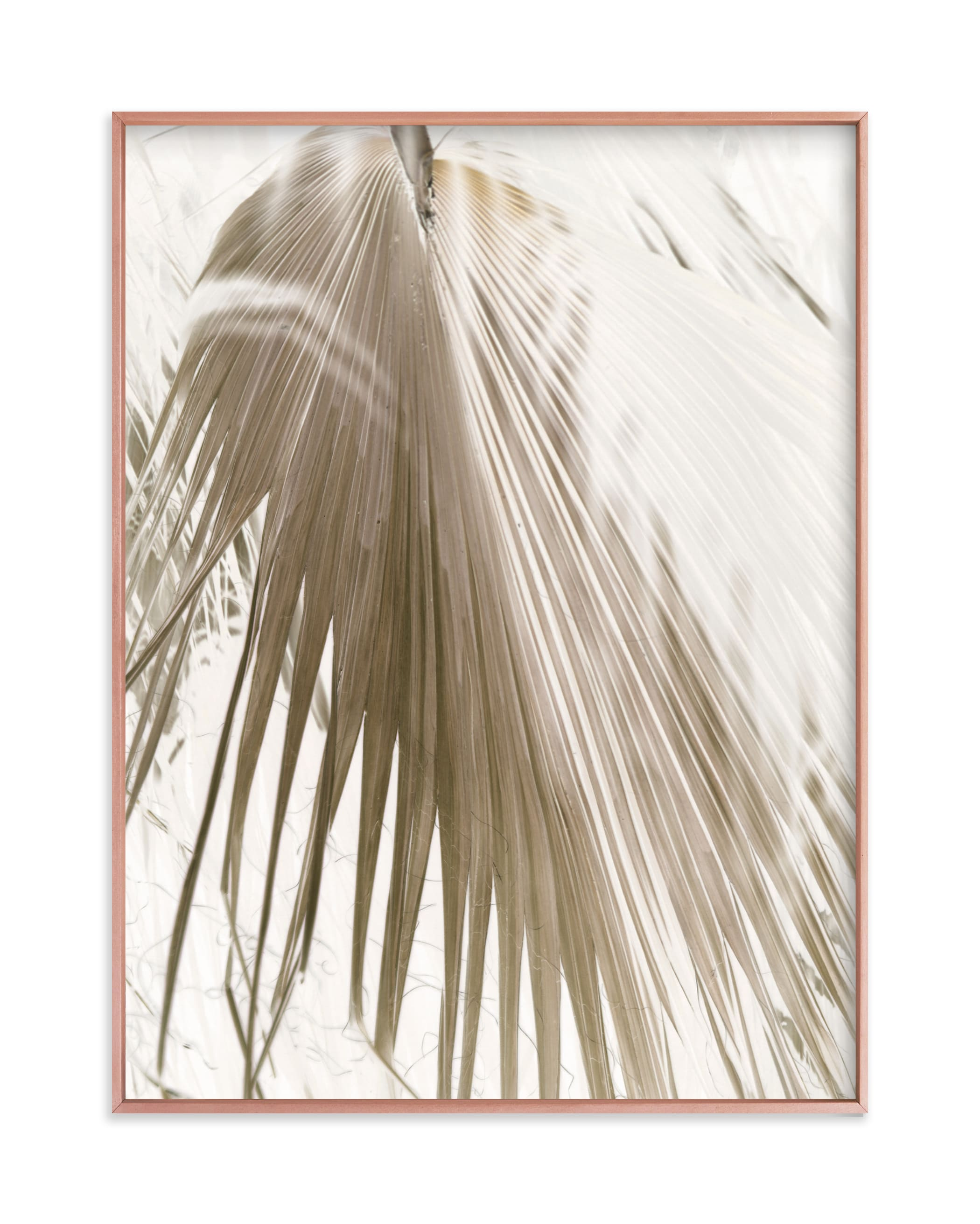 """""""Vanilla Palm"""" - Limited Edition Art Print by Owl and Toad in beautiful frame options and a variety of sizes."""