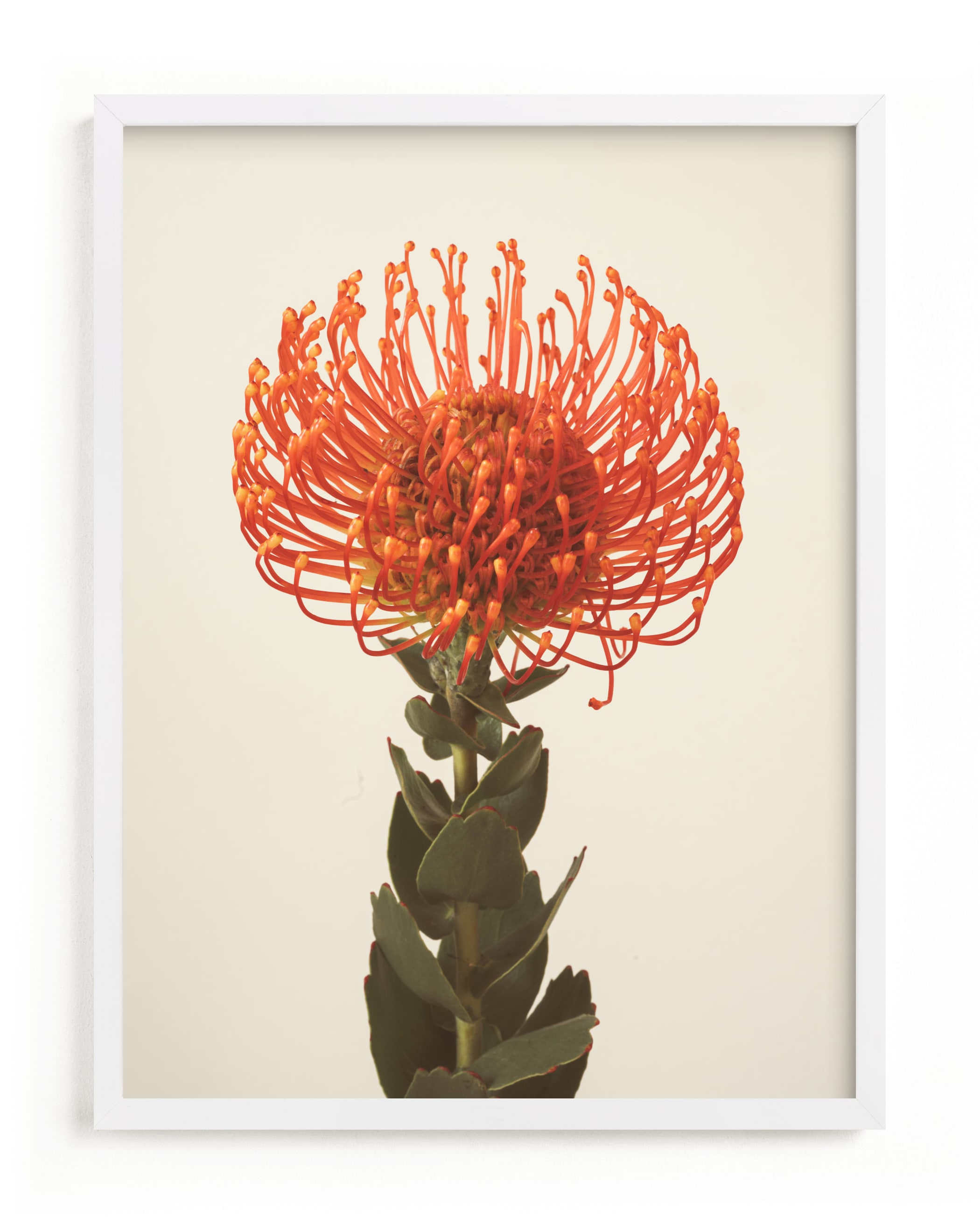 """Protea I"" - Limited Edition Art Print by Kamala Nahas in beautiful frame options and a variety of sizes."
