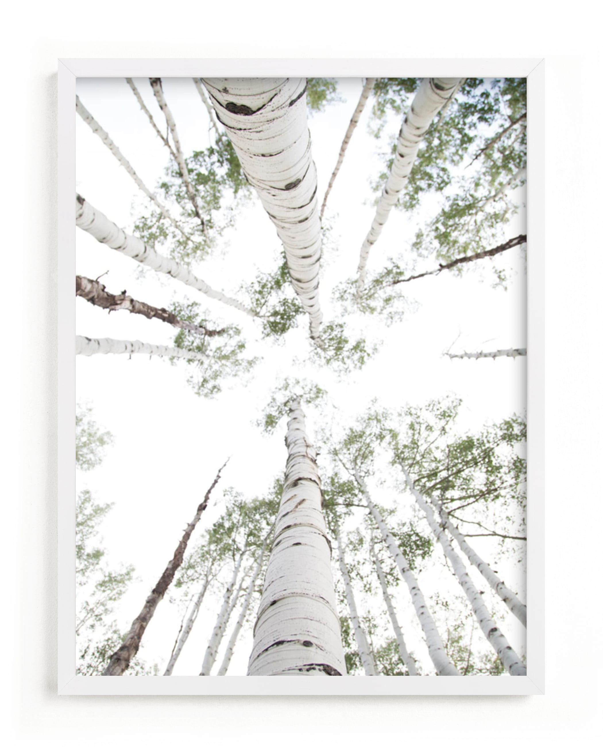 """Aspens at Altitude"" - Limited Edition Art Print by Kaleb Nimz in beautiful frame options and a variety of sizes."
