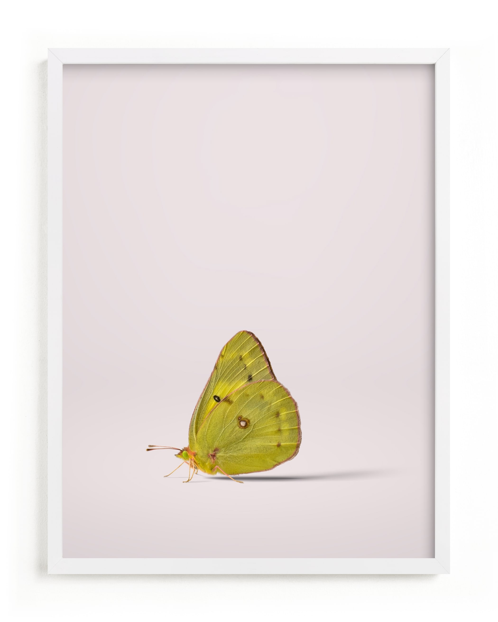 """""""Tiny Wings"""" - Limited Edition Art Print by Andrew McClintock in beautiful frame options and a variety of sizes."""