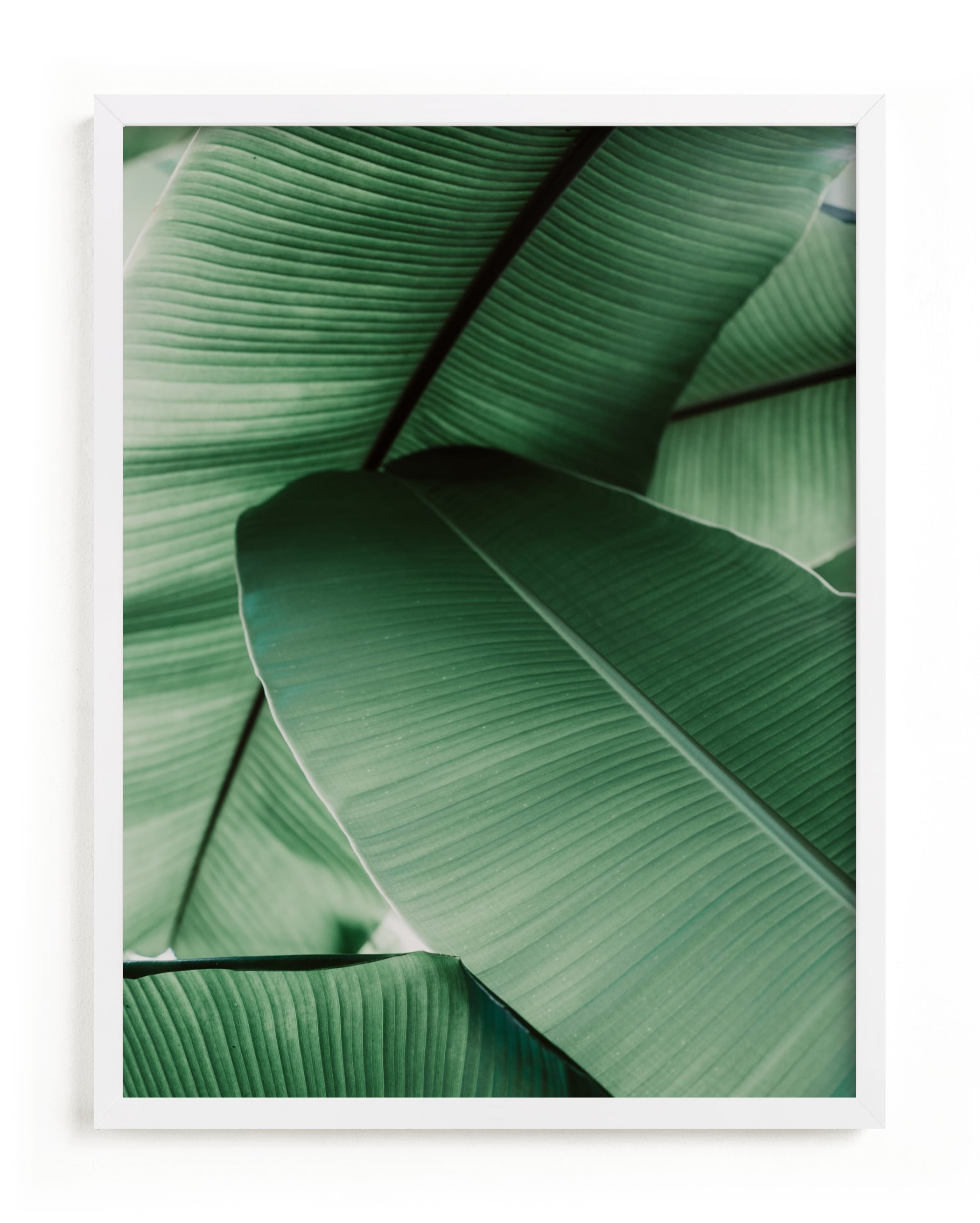 """""""Tropical Leaves"""" - Grownup Open Edition Non-custom Art Print by Alicia Abla in beautiful frame options and a variety of sizes."""