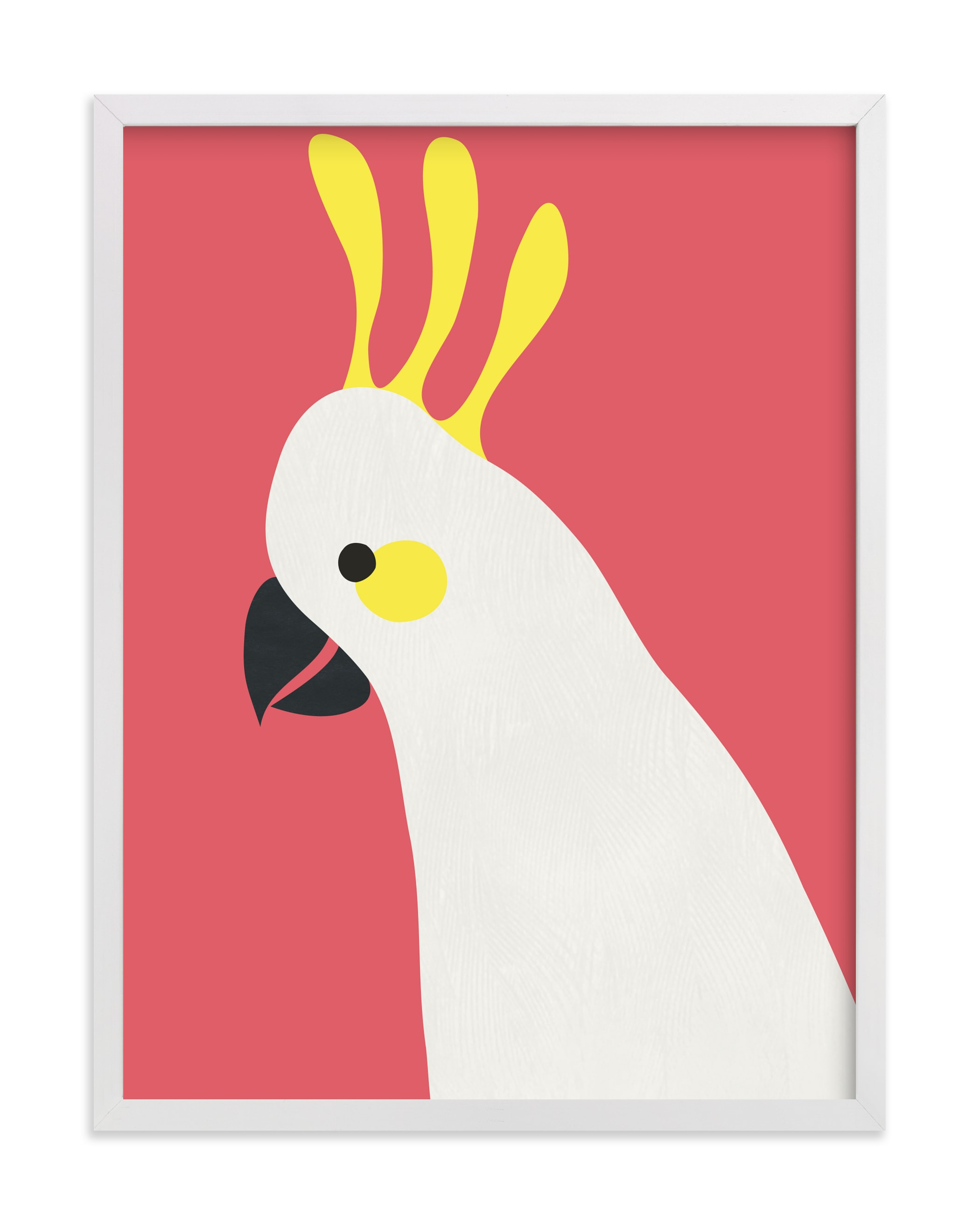 """""""Hello Cocky! """" - Art Print by Catherine Culvenor in beautiful frame options and a variety of sizes."""