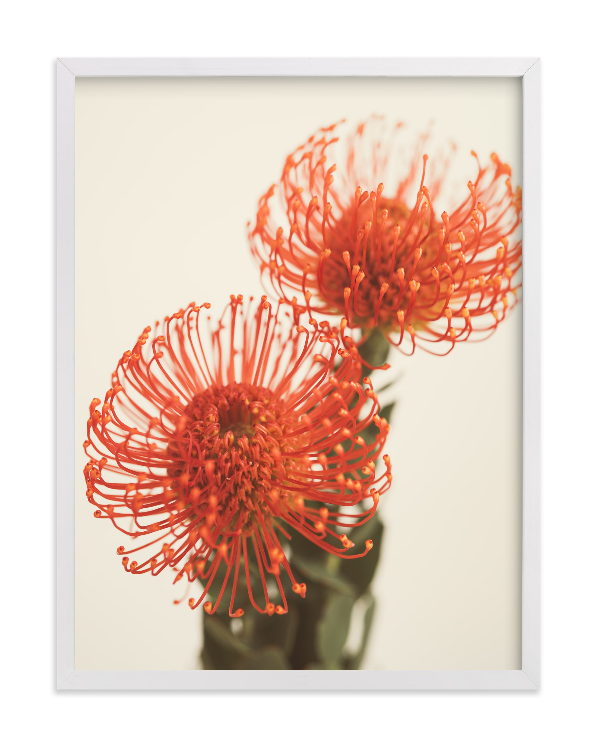 """""""Protea 2"""" by Kamala Nahas in beautiful frame options and a variety of sizes."""