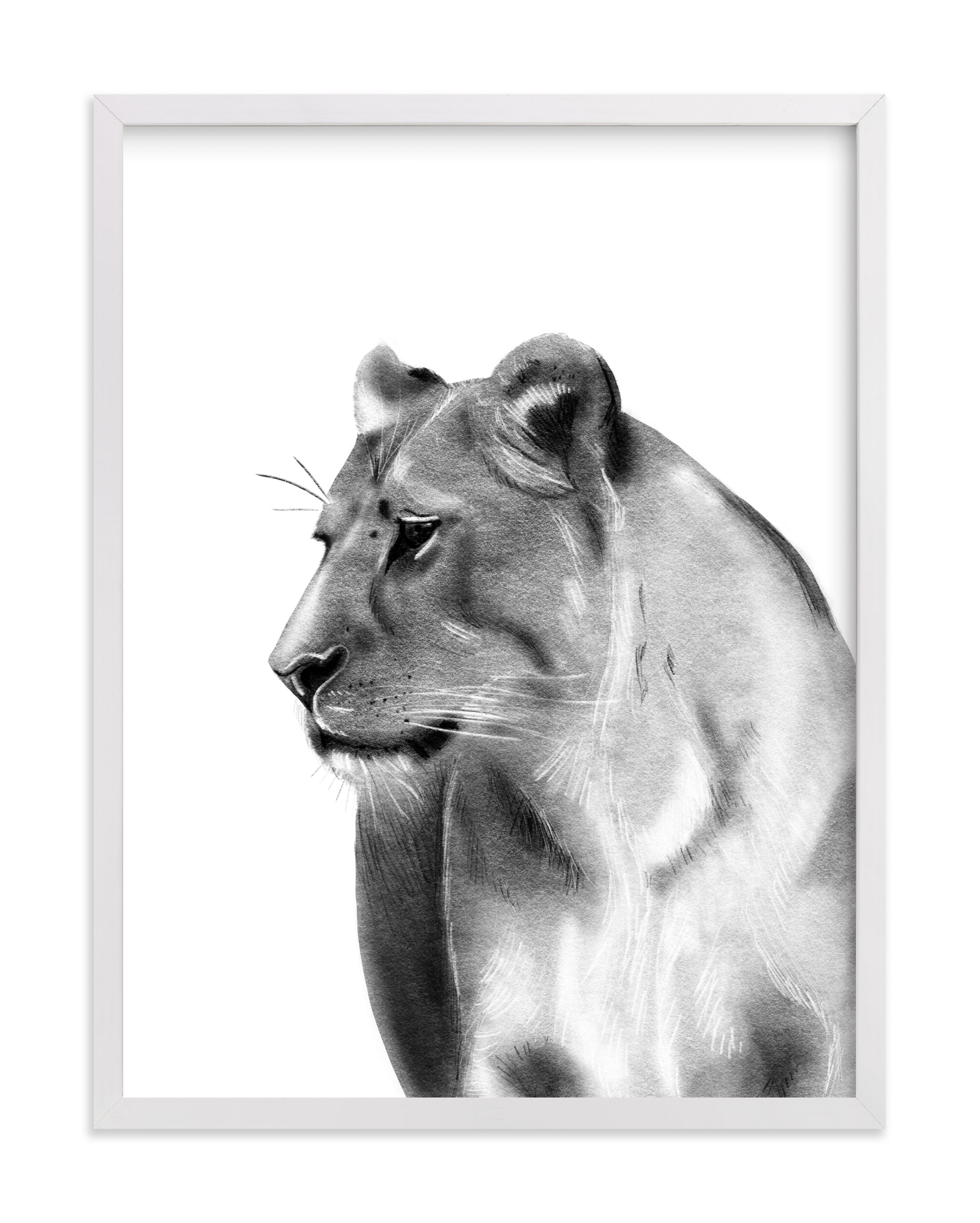 """""""Lioness Charcoal Drawing"""" by Becky Nimoy in beautiful frame options and a variety of sizes."""