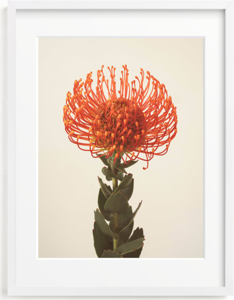 This is a beige art by Kamala Nahas called Protea I.