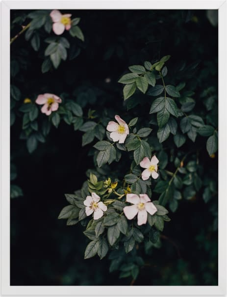 This is a white art by Hanke Arkenbout called Moody white roses.