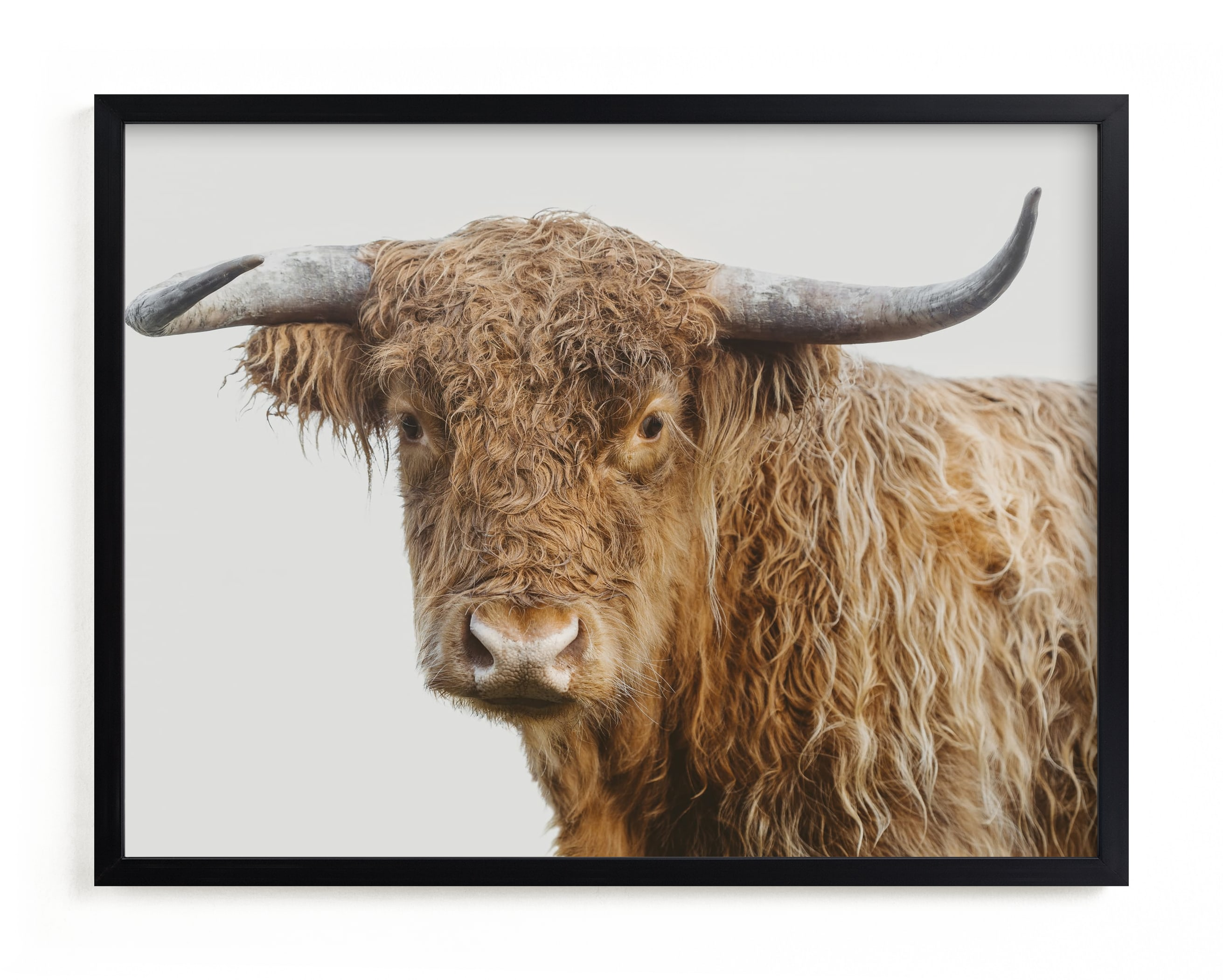 """""""Carl"""" - Limited Edition Art Print by Jennifer Morrow in beautiful frame options and a variety of sizes."""