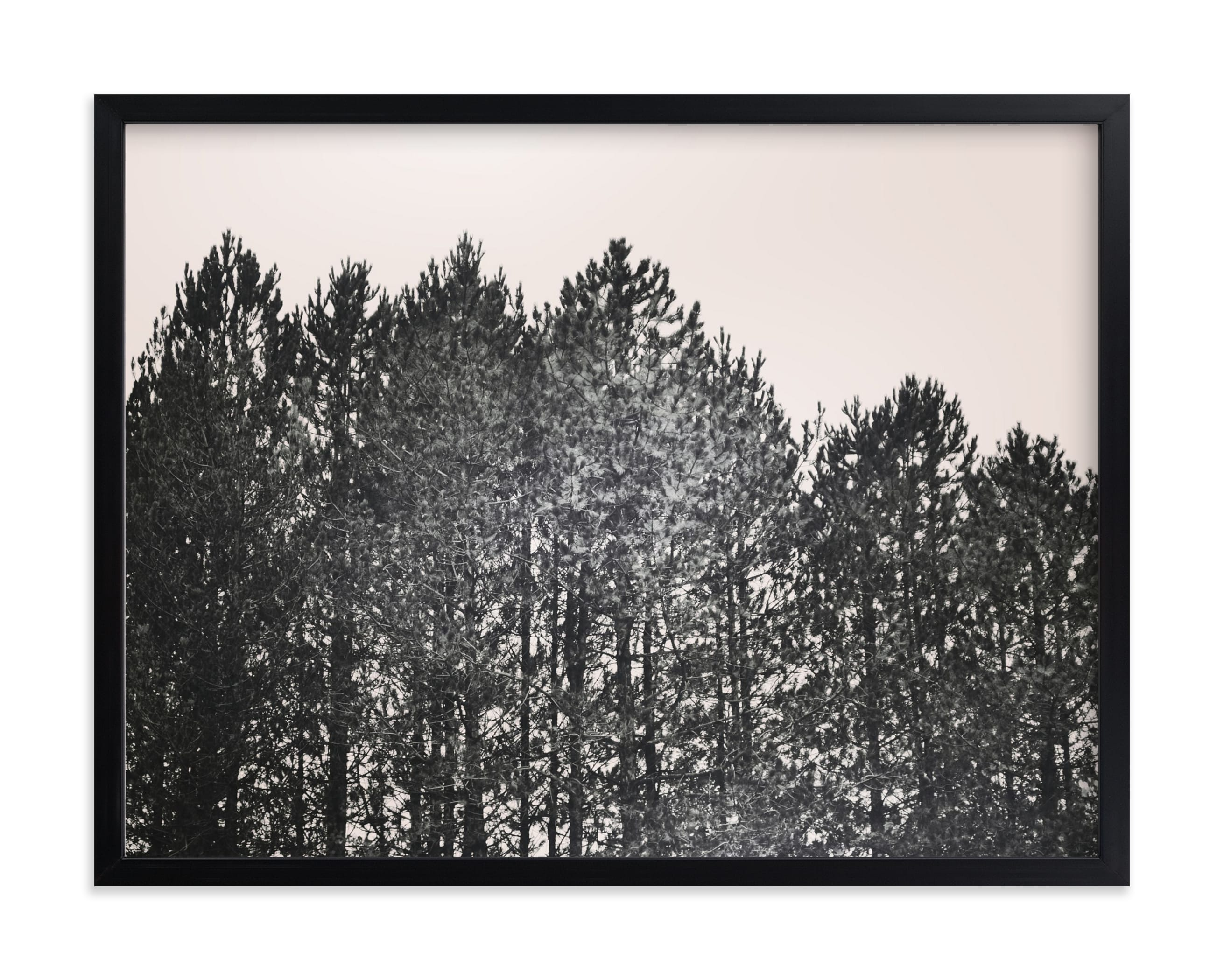 """""""Pines"""" - Limited Edition Art Print by Katie Short in beautiful frame options and a variety of sizes."""