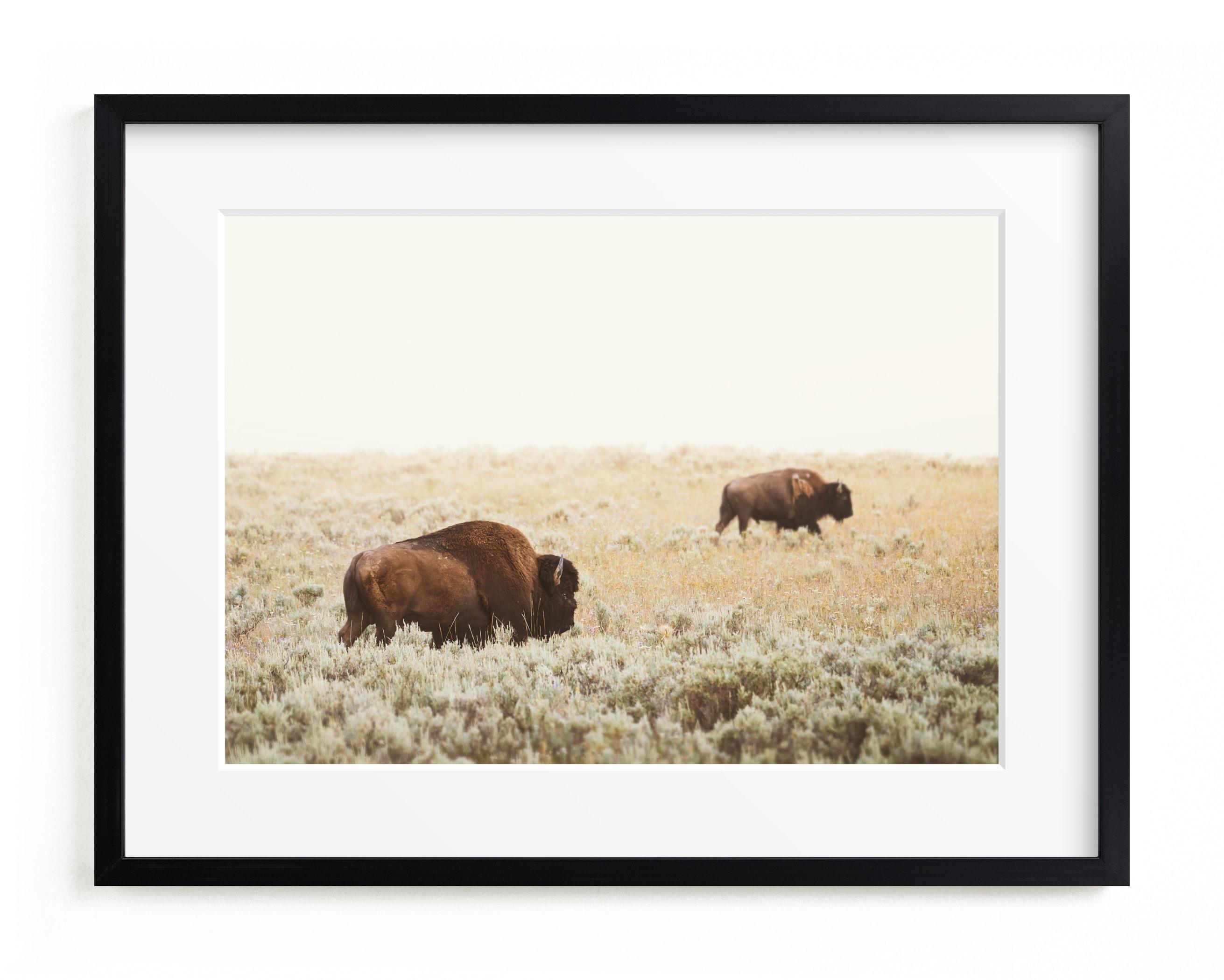 Bison Art Print