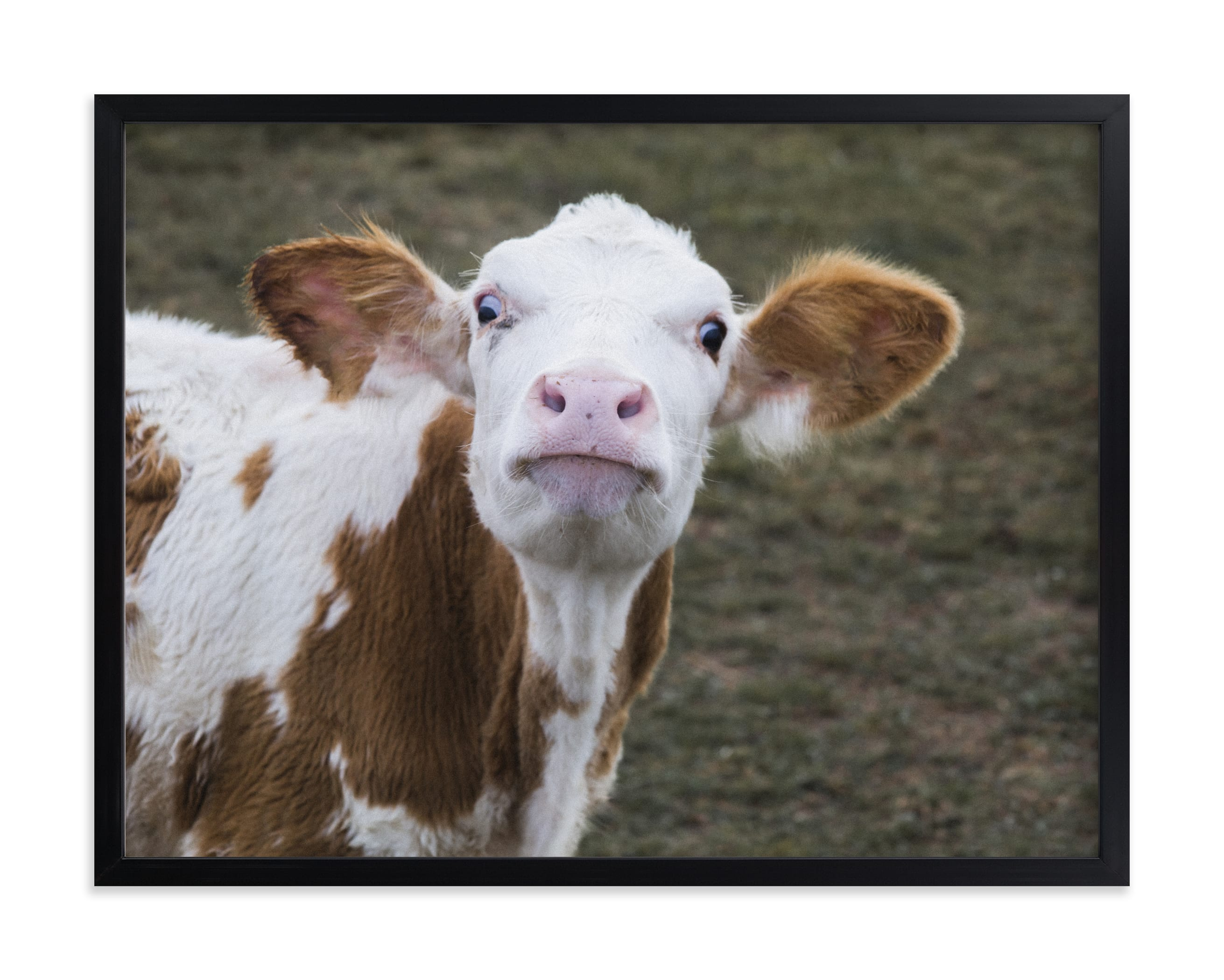 """""""Sweet fudge"""" by Lying on the grass in beautiful frame options and a variety of sizes."""