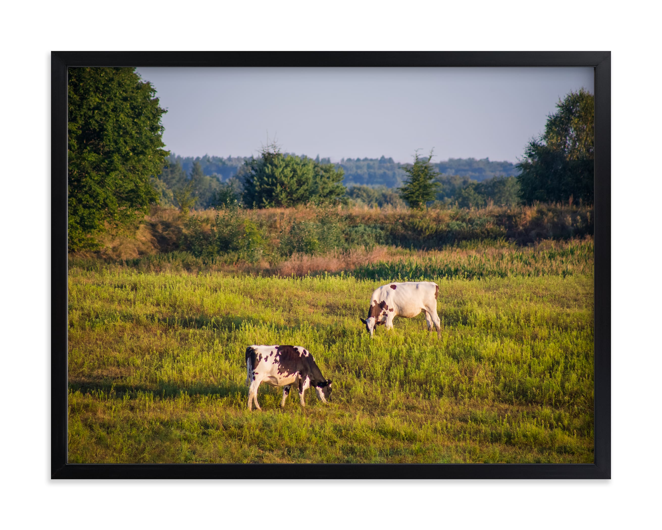 """Cows in the pasture"" by Lying on the grass in beautiful frame options and a variety of sizes."