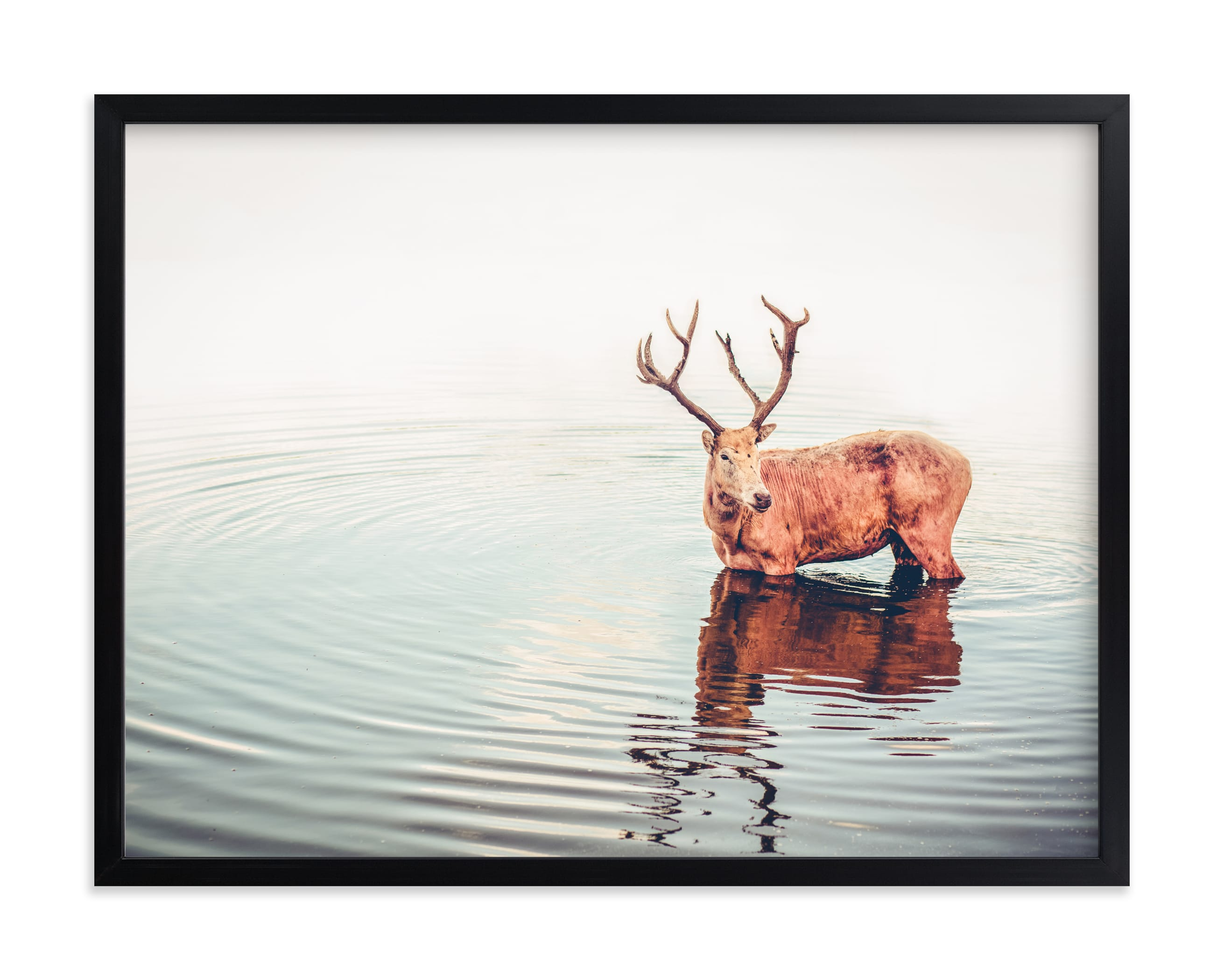 """""""Deer"""" by Lying on the grass in beautiful frame options and a variety of sizes."""