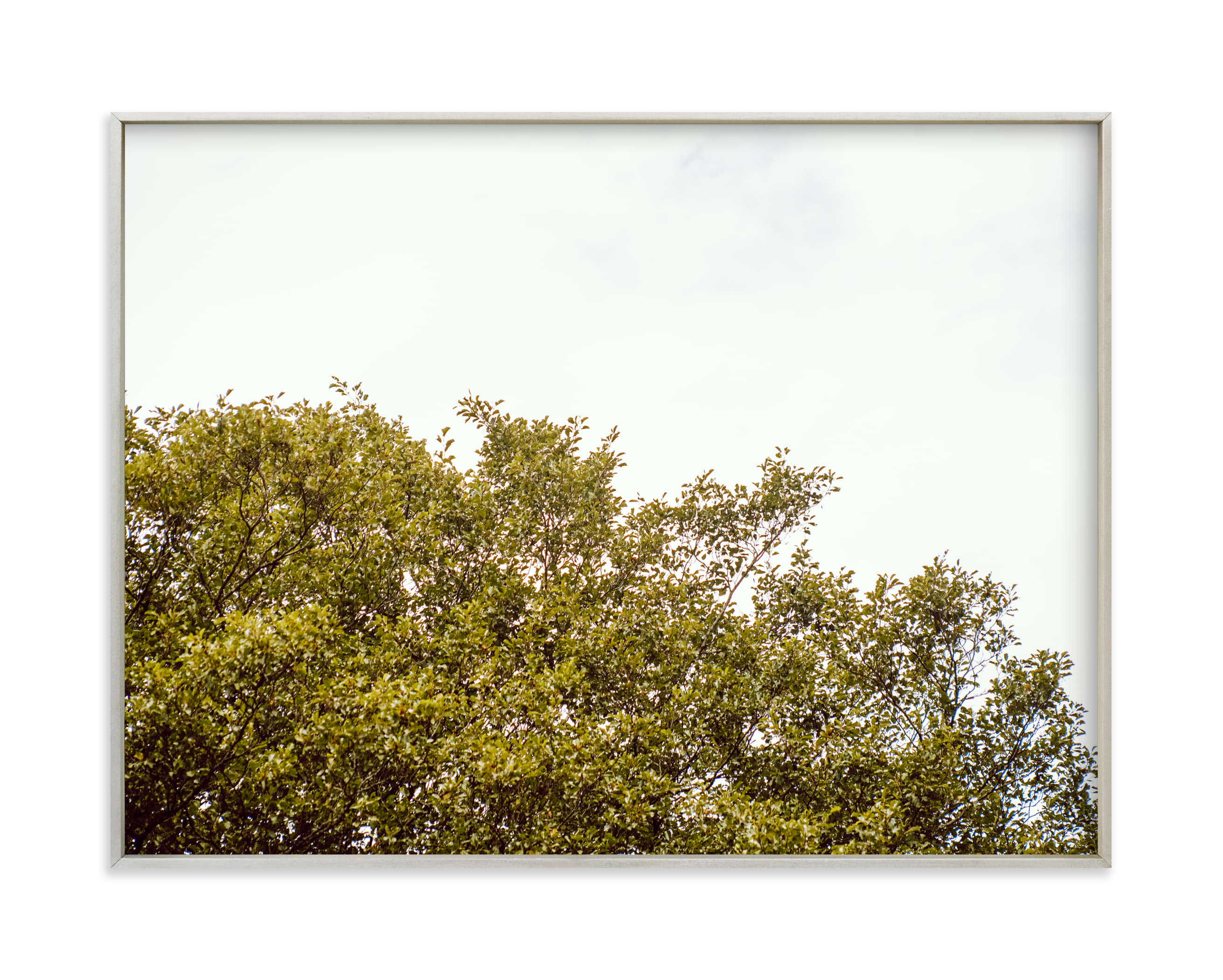 """""""Trees in the clouds II"""" by Lying on the grass in beautiful frame options and a variety of sizes."""