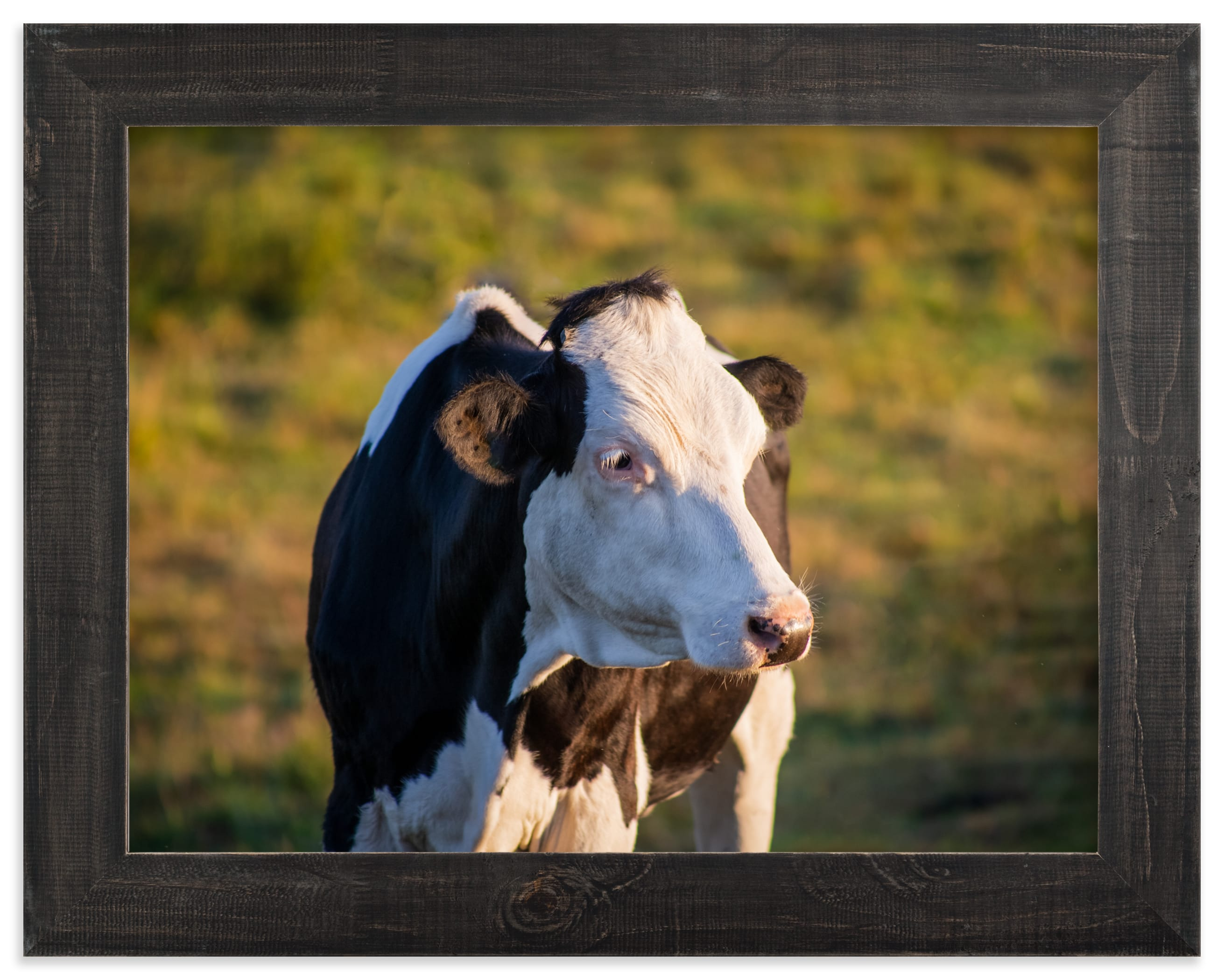 """Cow and sunset II"" by Lying on the grass in beautiful frame options and a variety of sizes."