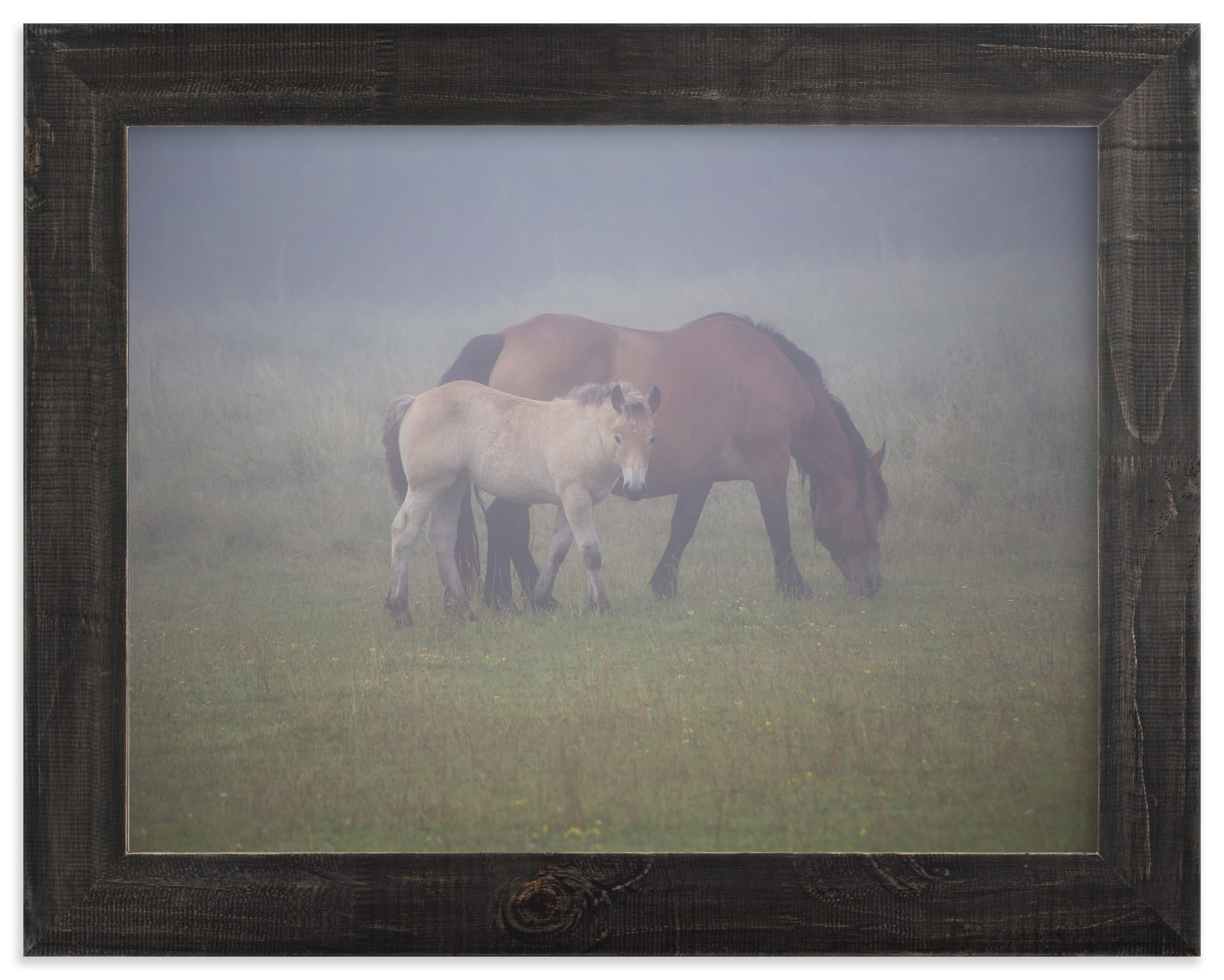 """""""A foal with its mother"""" by Lying on the grass in beautiful frame options and a variety of sizes."""