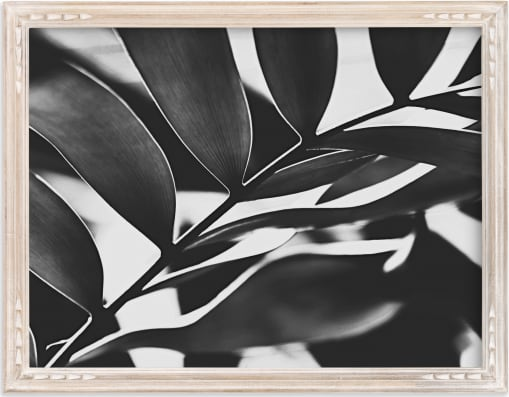 This is a black and white art by Amy Chapman Braun called GLOWING BOTANICAL I.