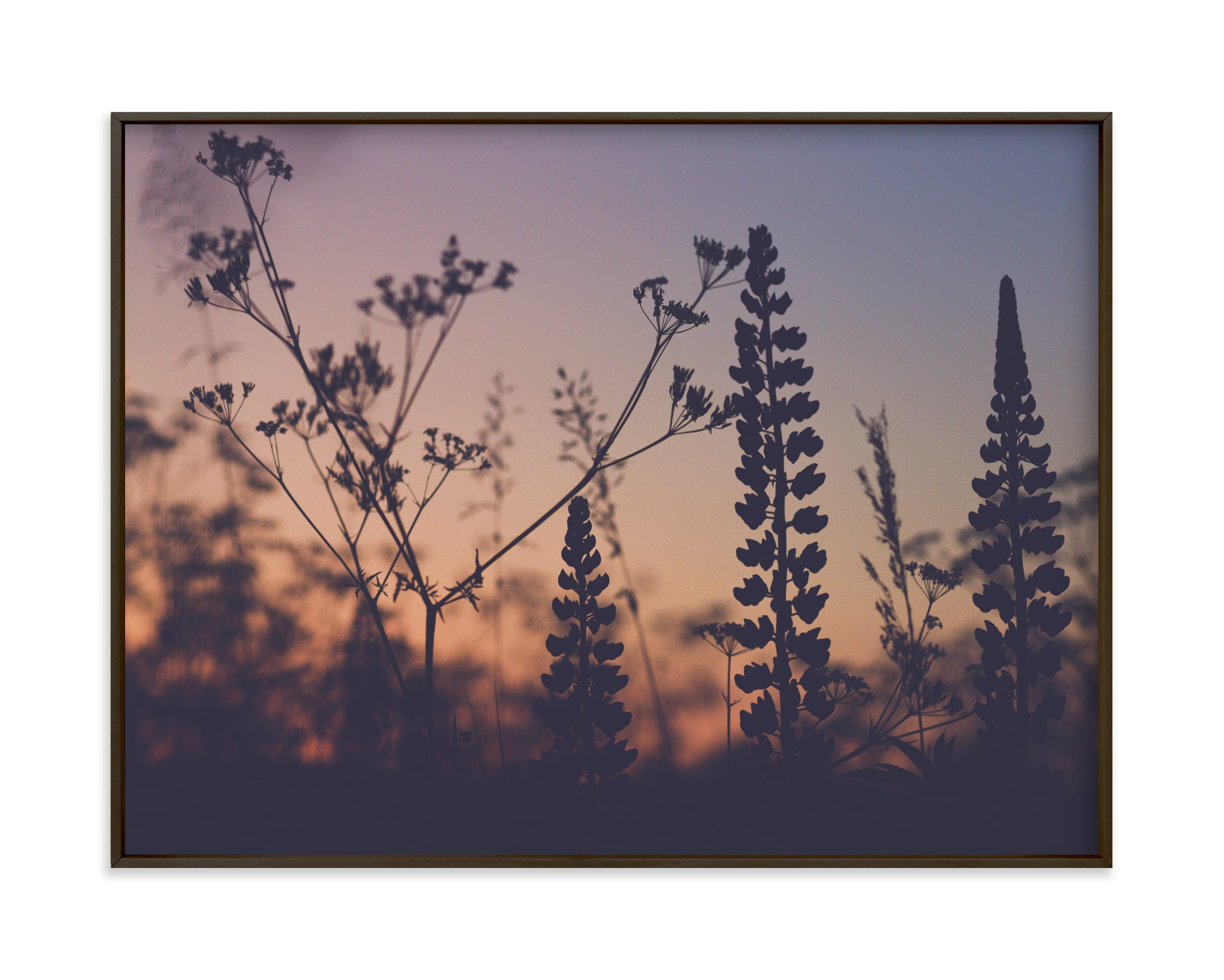 """"""" Sunset among the grasses III"""" by Lying on the grass in beautiful frame options and a variety of sizes."""