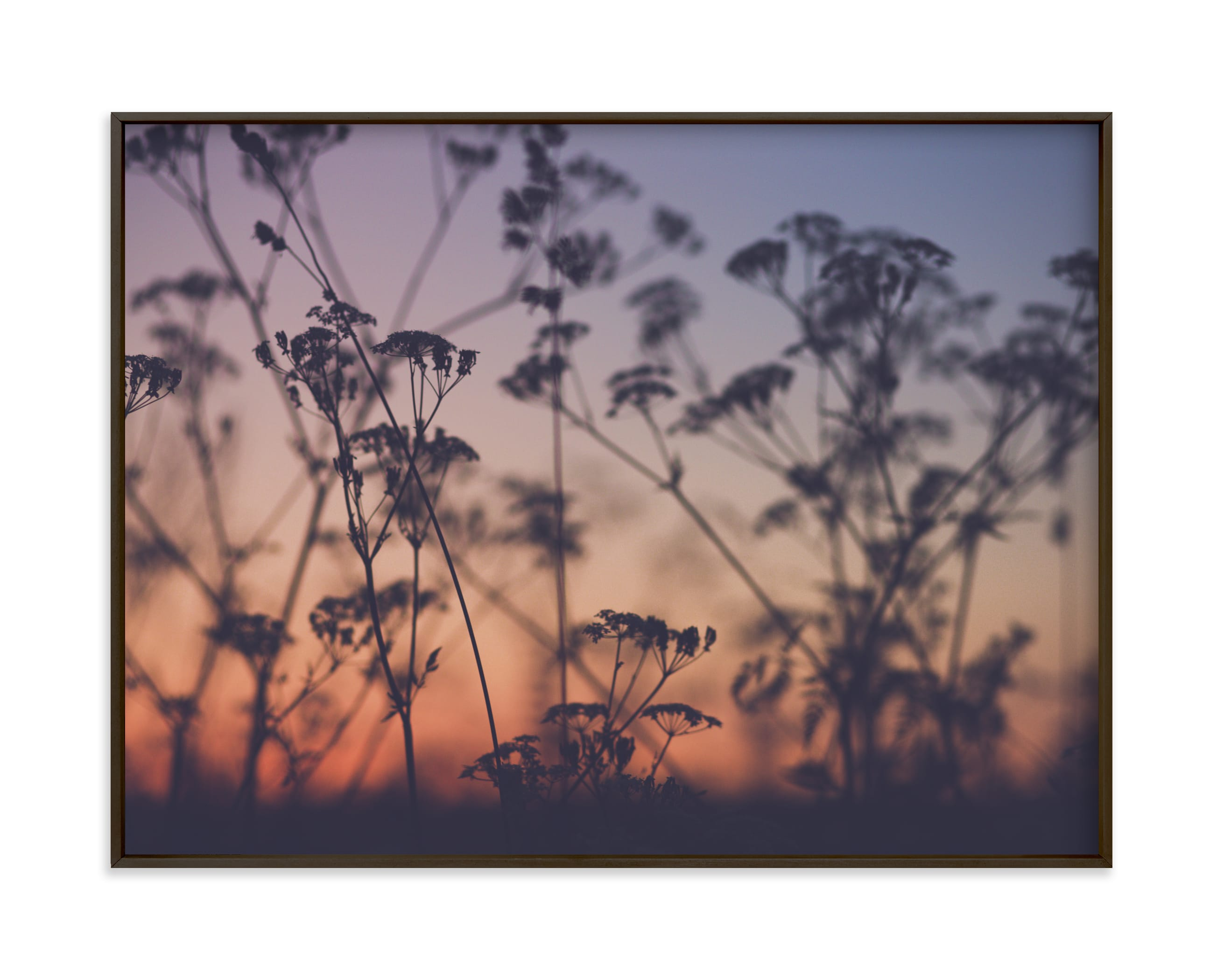 """""""Sunset among the grasses II"""" by Lying on the grass in beautiful frame options and a variety of sizes."""