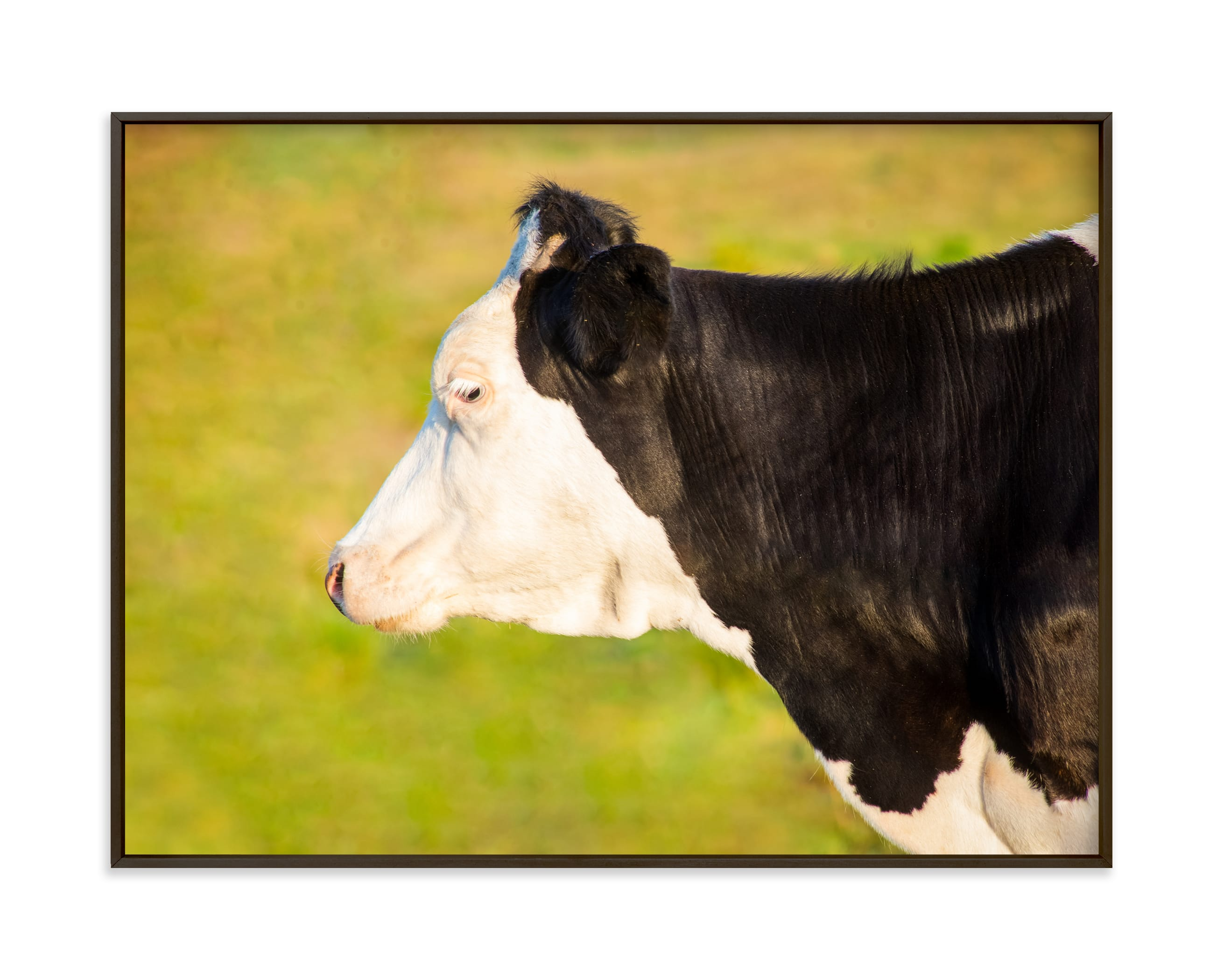 """""""Cow profile"""" by Lying on the grass in beautiful frame options and a variety of sizes."""
