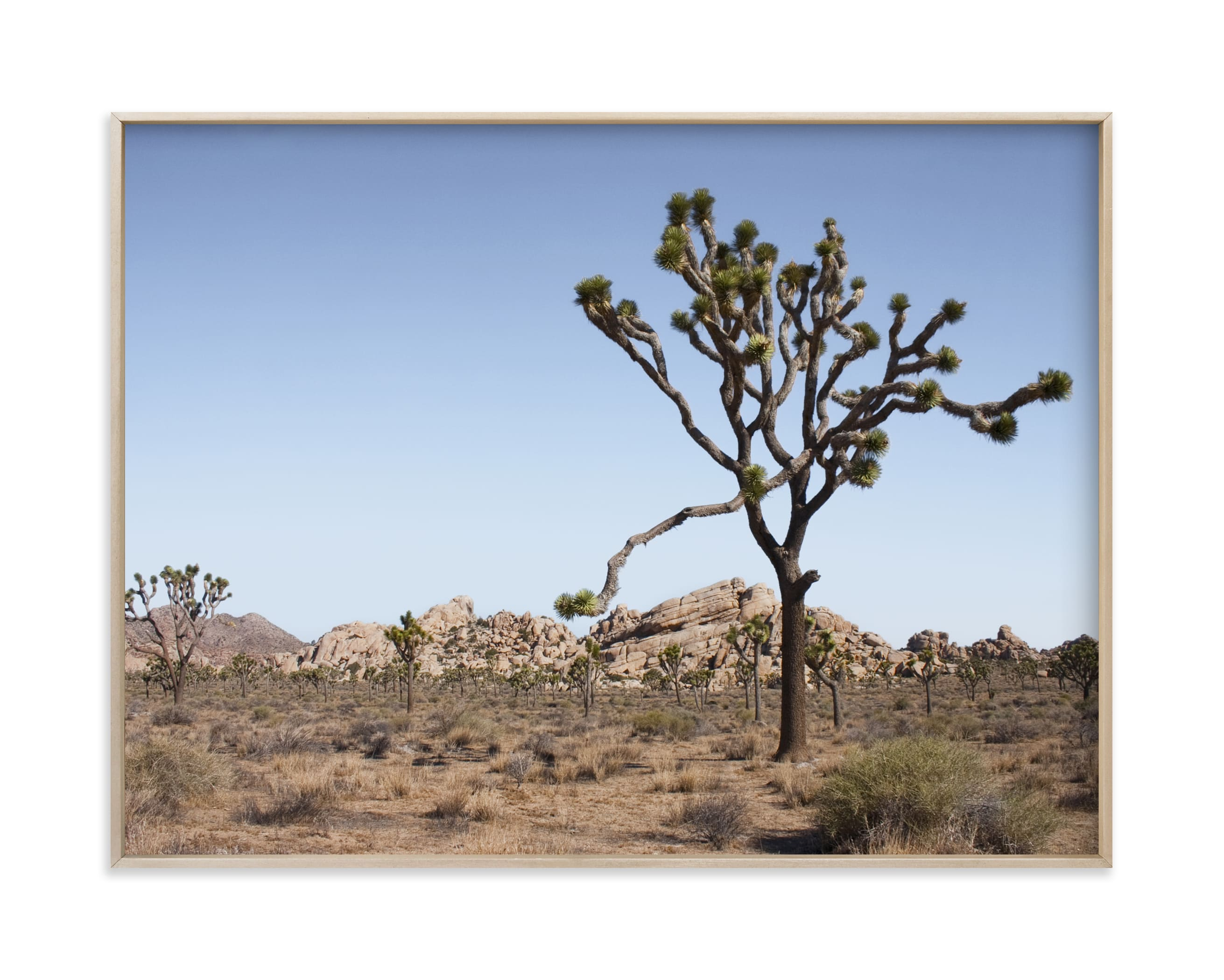 """Joshua Tree With Rock Formation in"" - Limited Edition Art Print by Kathy Van Torne in beautiful frame options and a variety of sizes."