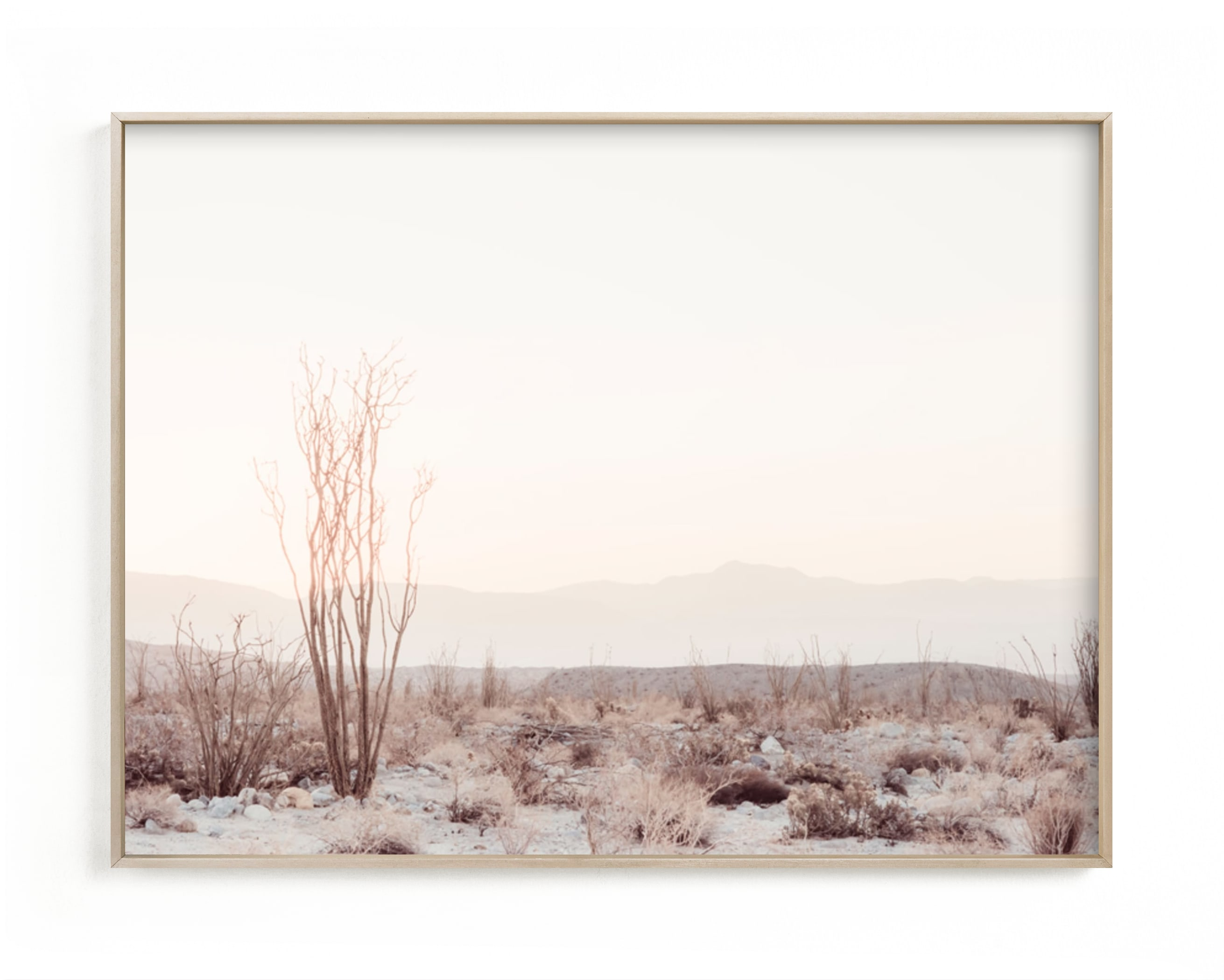 """""""Ocotillo II"""" - Limited Edition Art Print by Kamala Nahas in beautiful frame options and a variety of sizes."""
