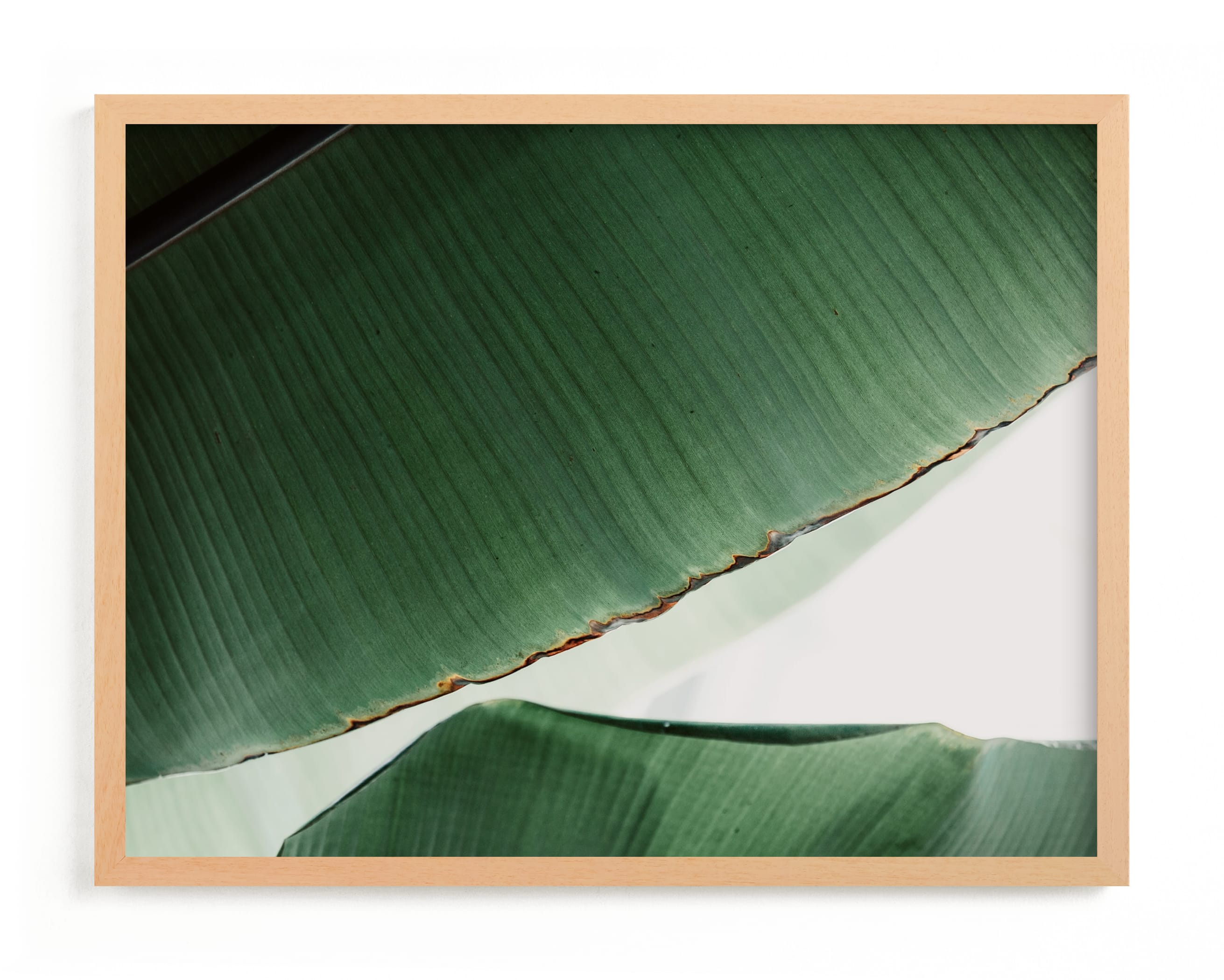 """""""leaf & light 1"""" - Limited Edition Art Print by Alicia Abla in beautiful frame options and a variety of sizes."""