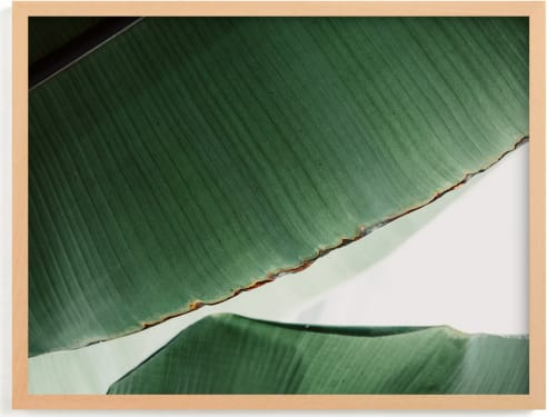 This is a white art by Alicia Abla called leaf & light 1.