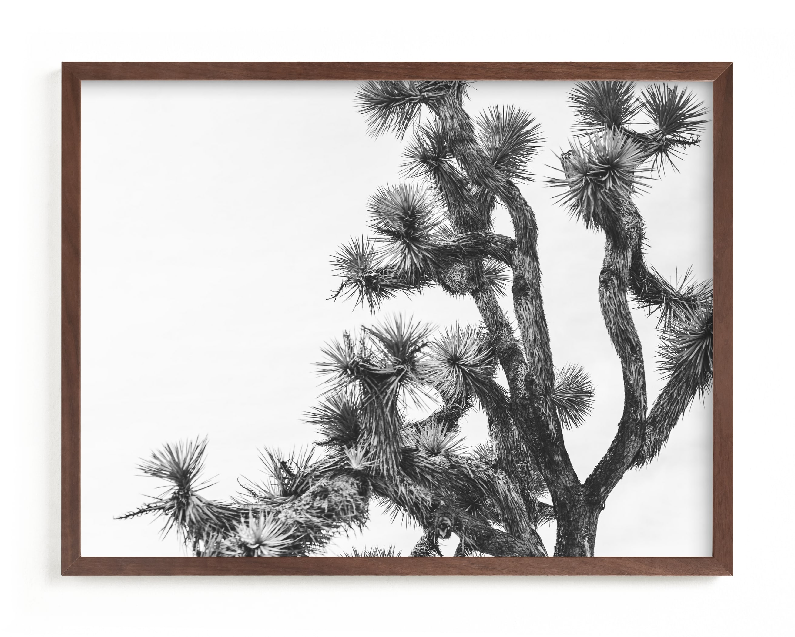 """Joshua Tree in September"" - Limited Edition Art Print by Katie Doherty in beautiful frame options and a variety of sizes."