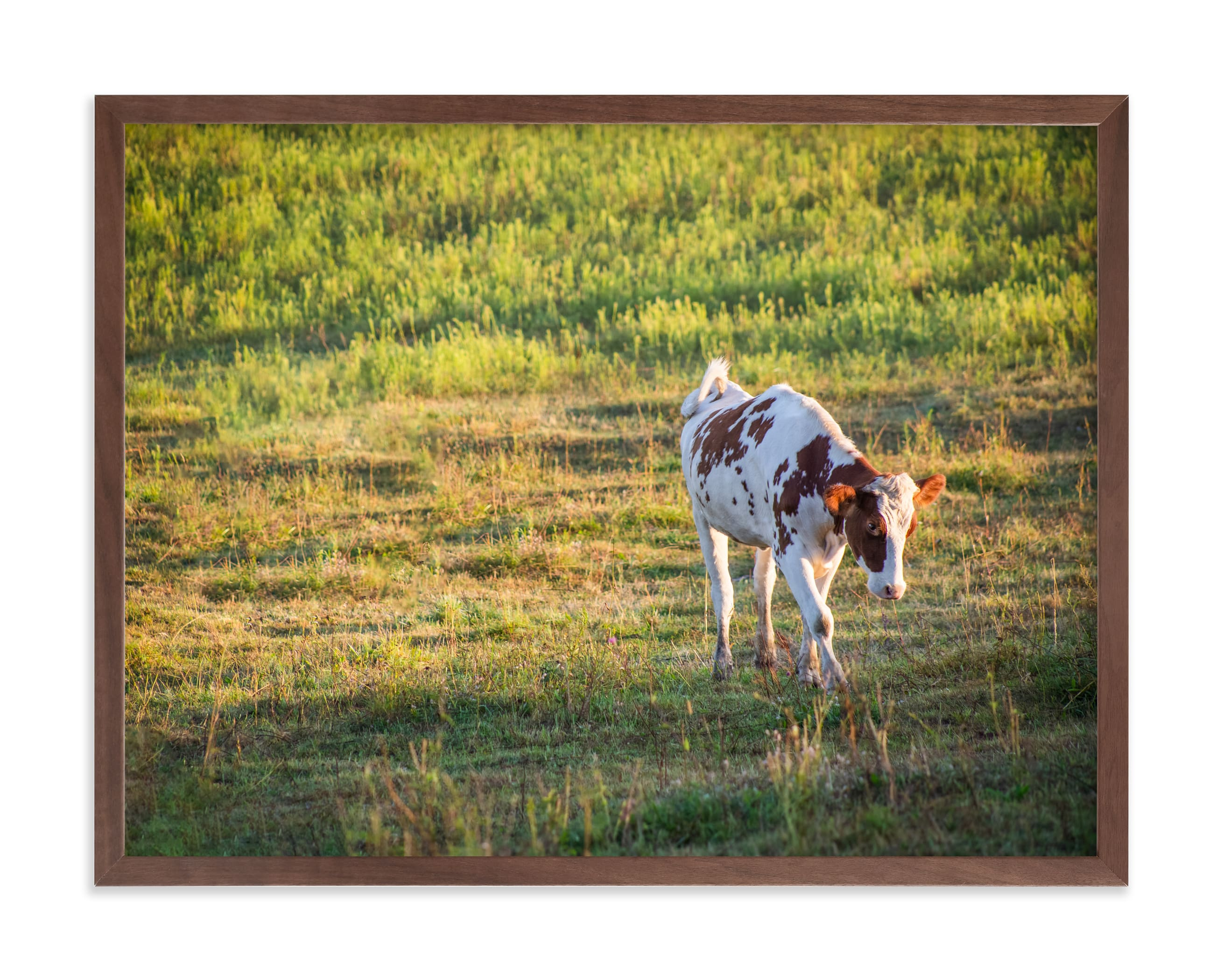 """Walk"" by Lying on the grass in beautiful frame options and a variety of sizes."