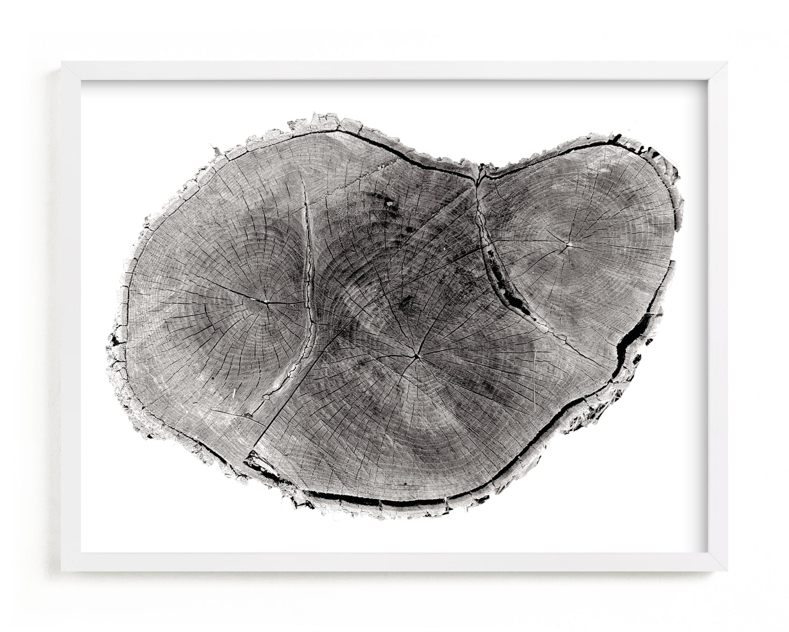 Tree Rings pt. 1 Art Print