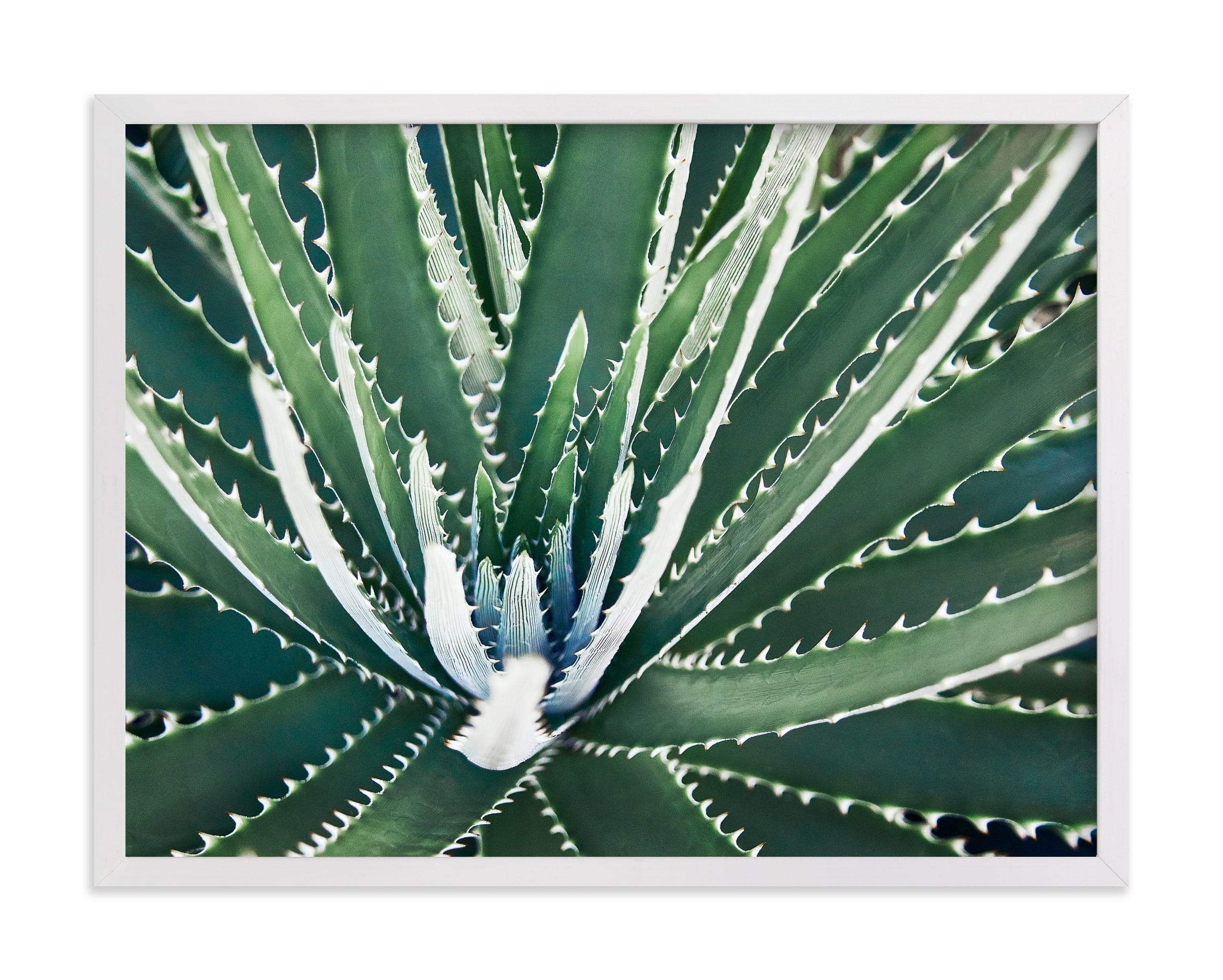 """""""Botanical VIIII"""" by Whitley Williams in beautiful frame options and a variety of sizes."""