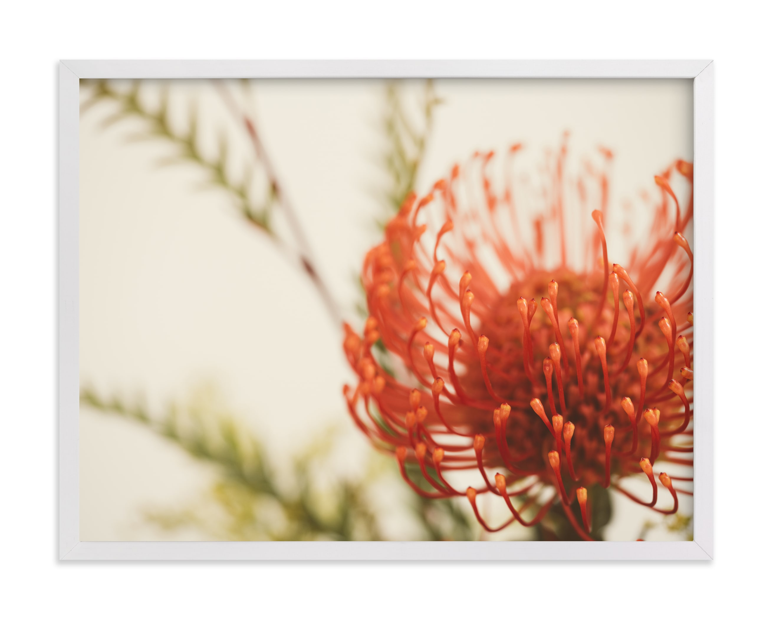 """""""Protea 4"""" by Kamala Nahas in beautiful frame options and a variety of sizes."""