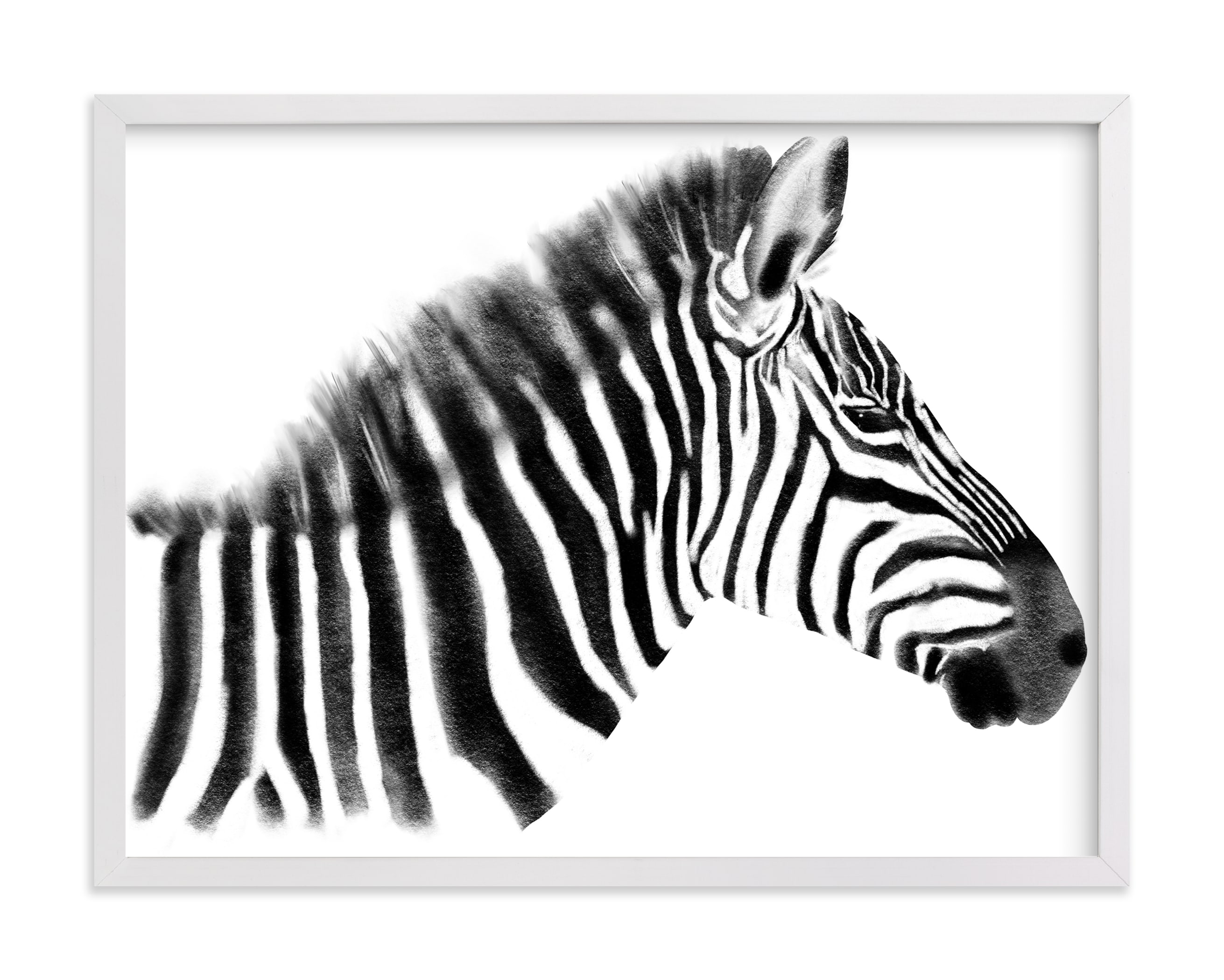 """""""Zebra Charcoal Drawing"""" by Becky Nimoy in beautiful frame options and a variety of sizes."""