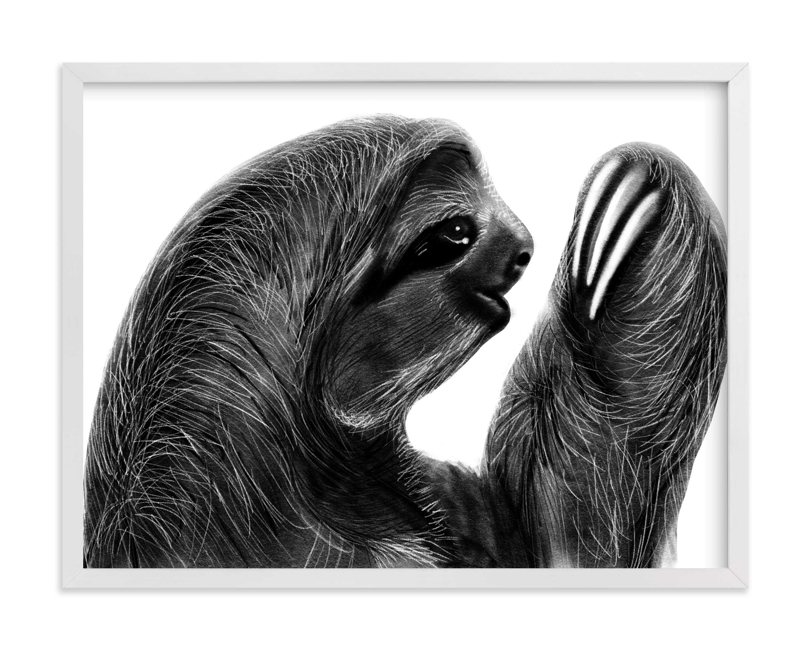 """Sloth Charcoal Drawing"" by Becky Nimoy in beautiful frame options and a variety of sizes."