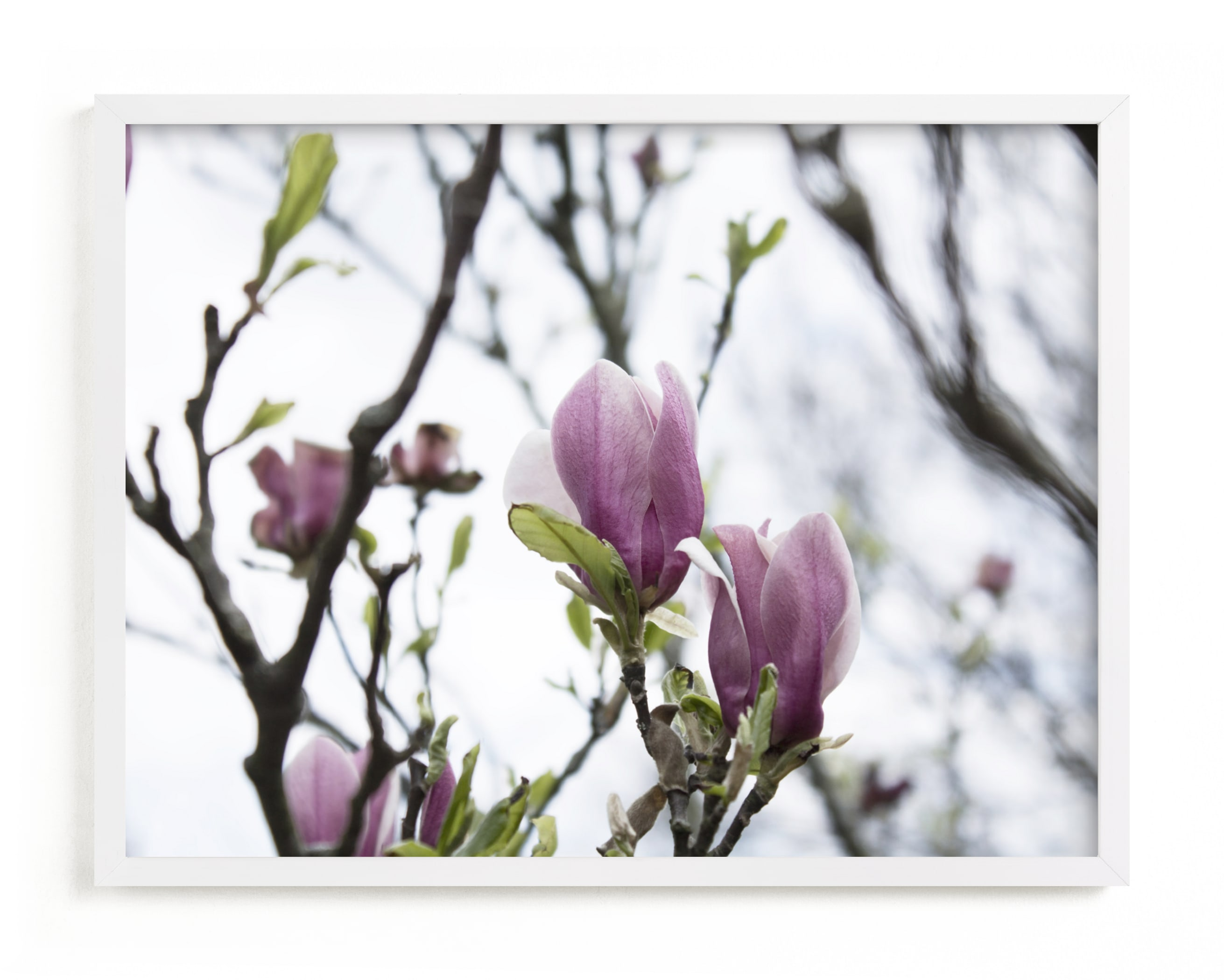 """""""Sugar Magnolia"""" by Karen Kaul in beautiful frame options and a variety of sizes."""