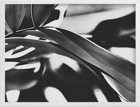 This is a black and white art by Amy Chapman Braun called GLOWING BOTANICAL II.