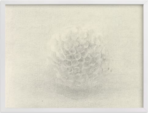 This is a ivory art by Elisabeth Larson called Sea Urchin.